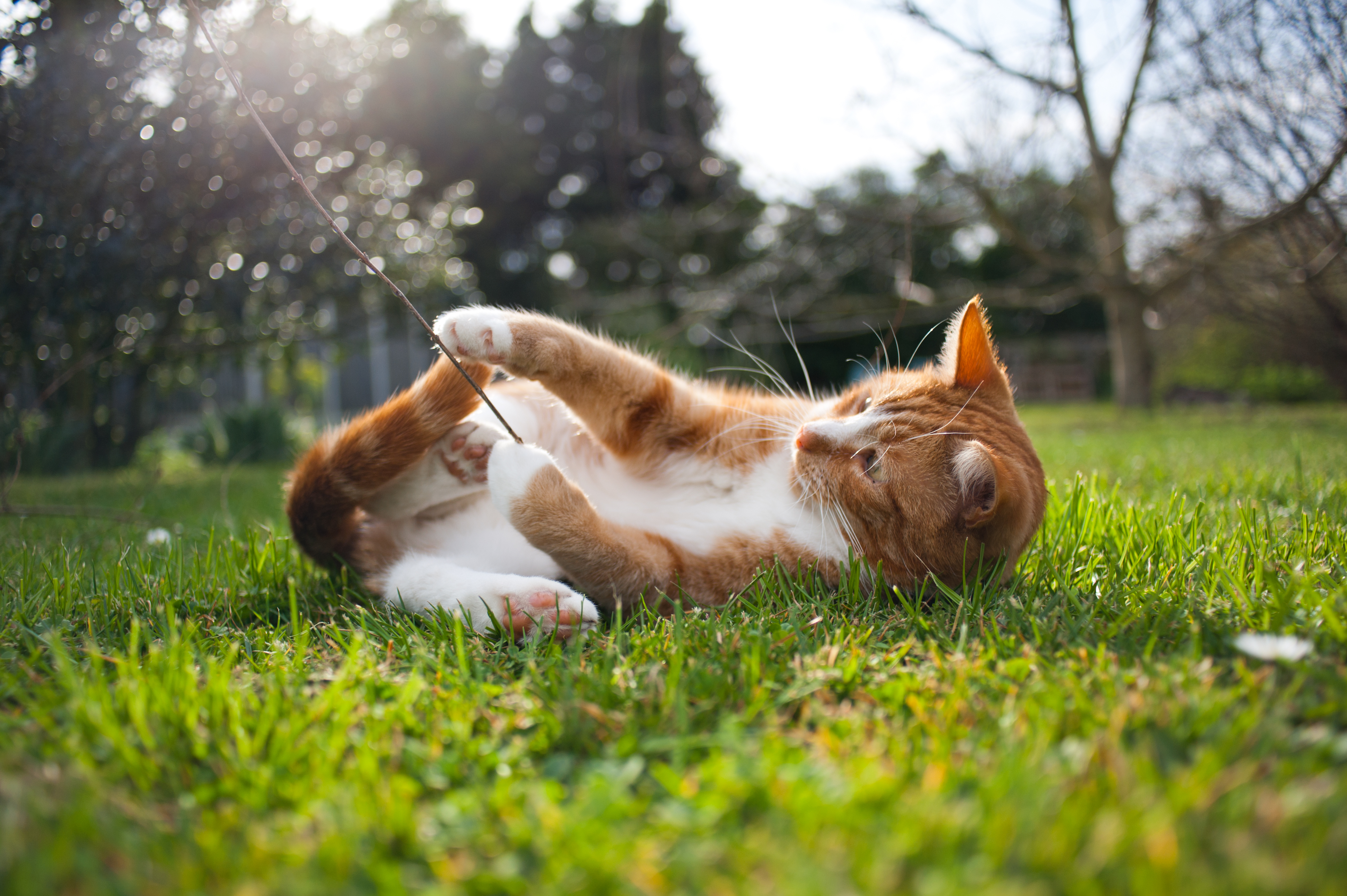 Keep Cats Off Patio Furniture.How To Get Rid Of Cats In Your Backyard Home Guides Sf Gate