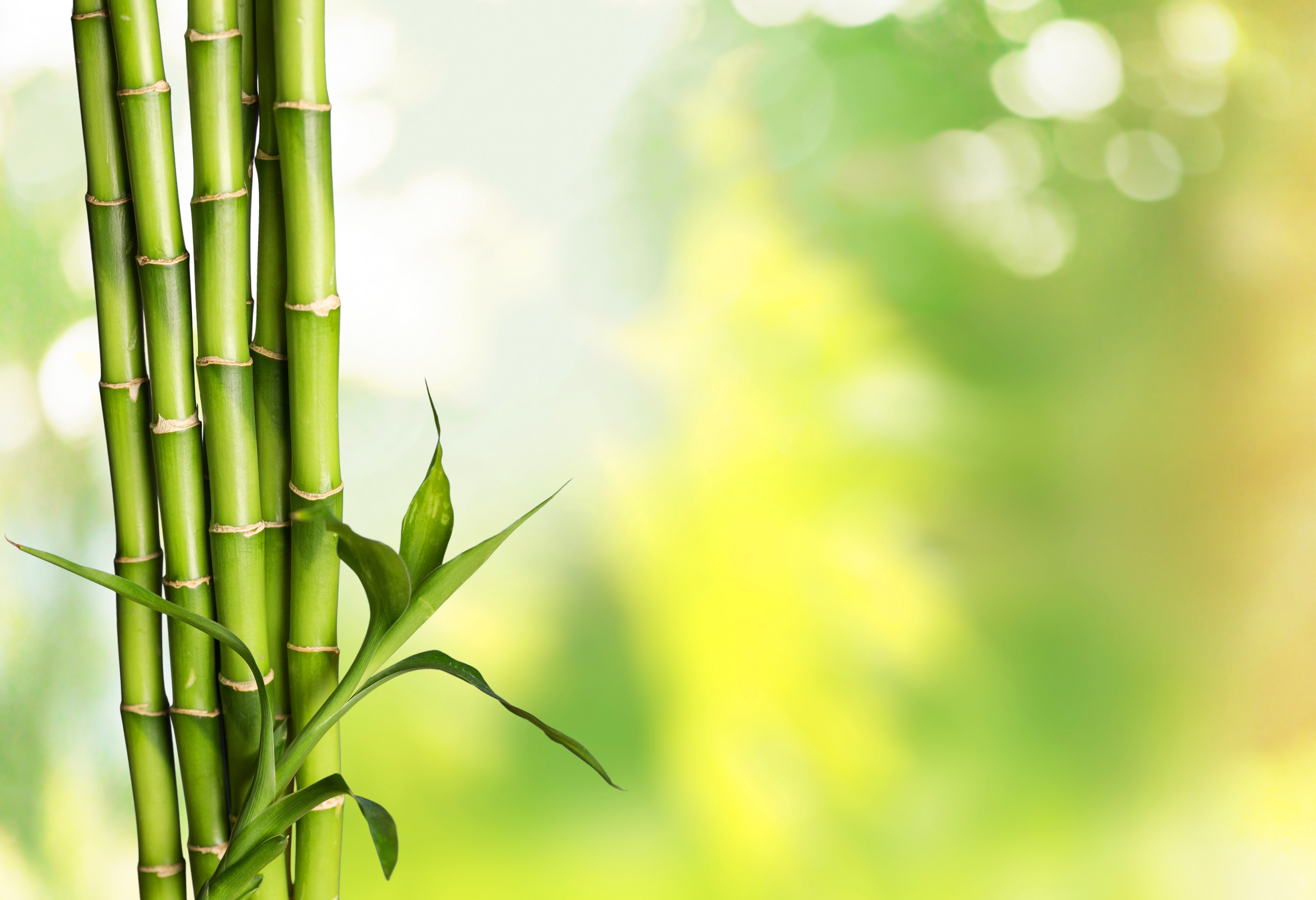 How to Plant Moso Bamboo Seeds | Home Guides | SF Gate