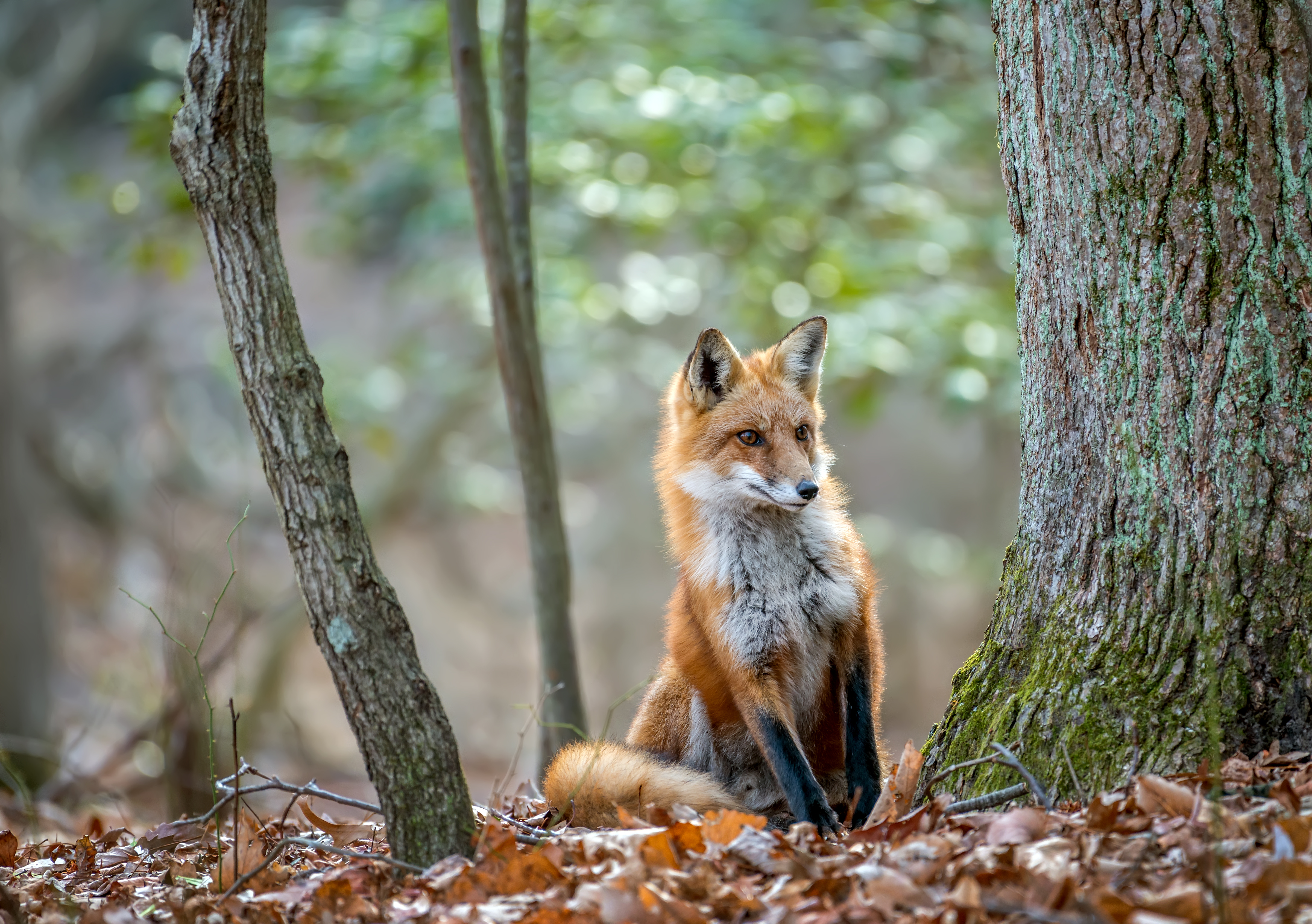 Which Animals Are Woodland Animals?