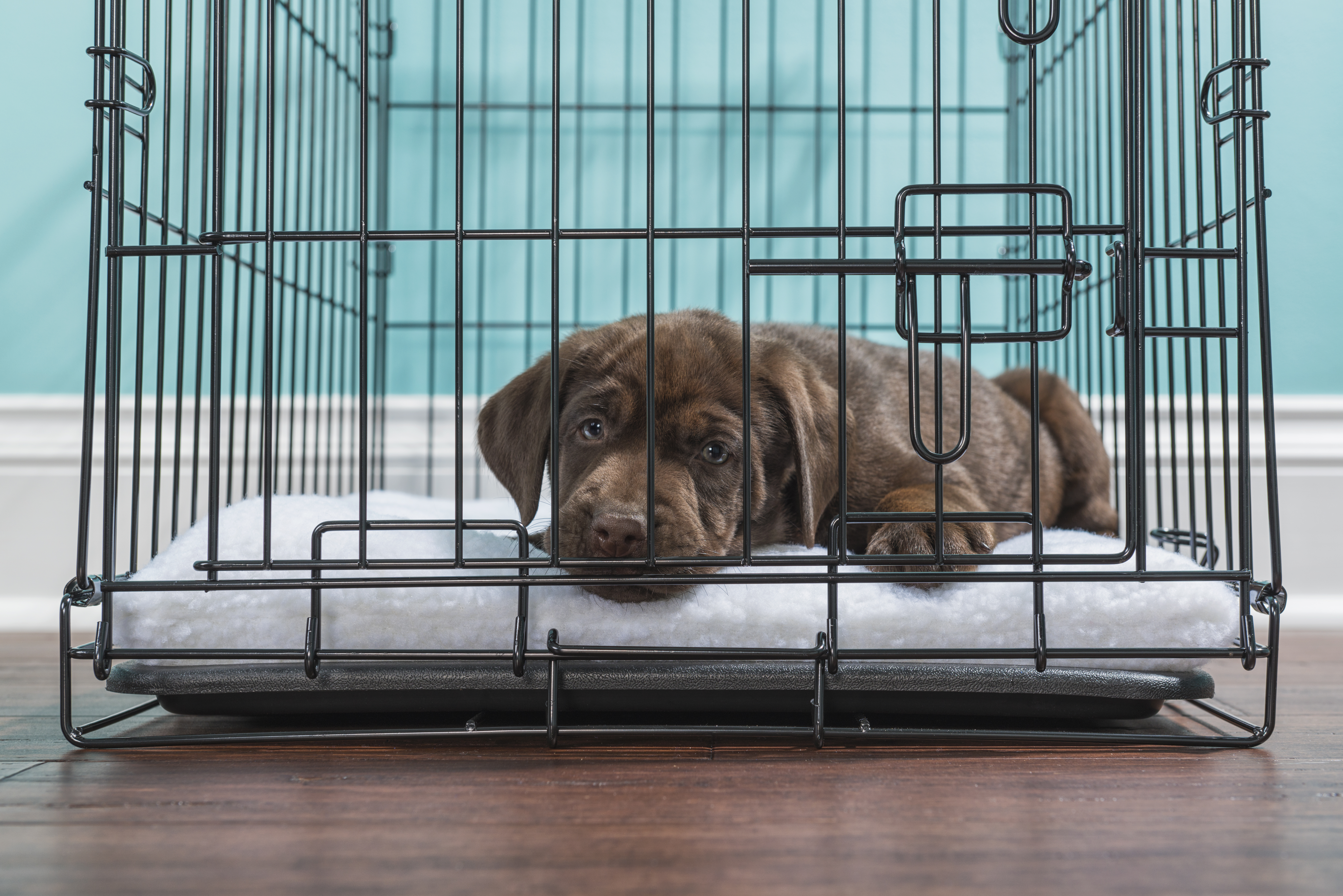 Should You Cover Your Dog S Crate Cuteness