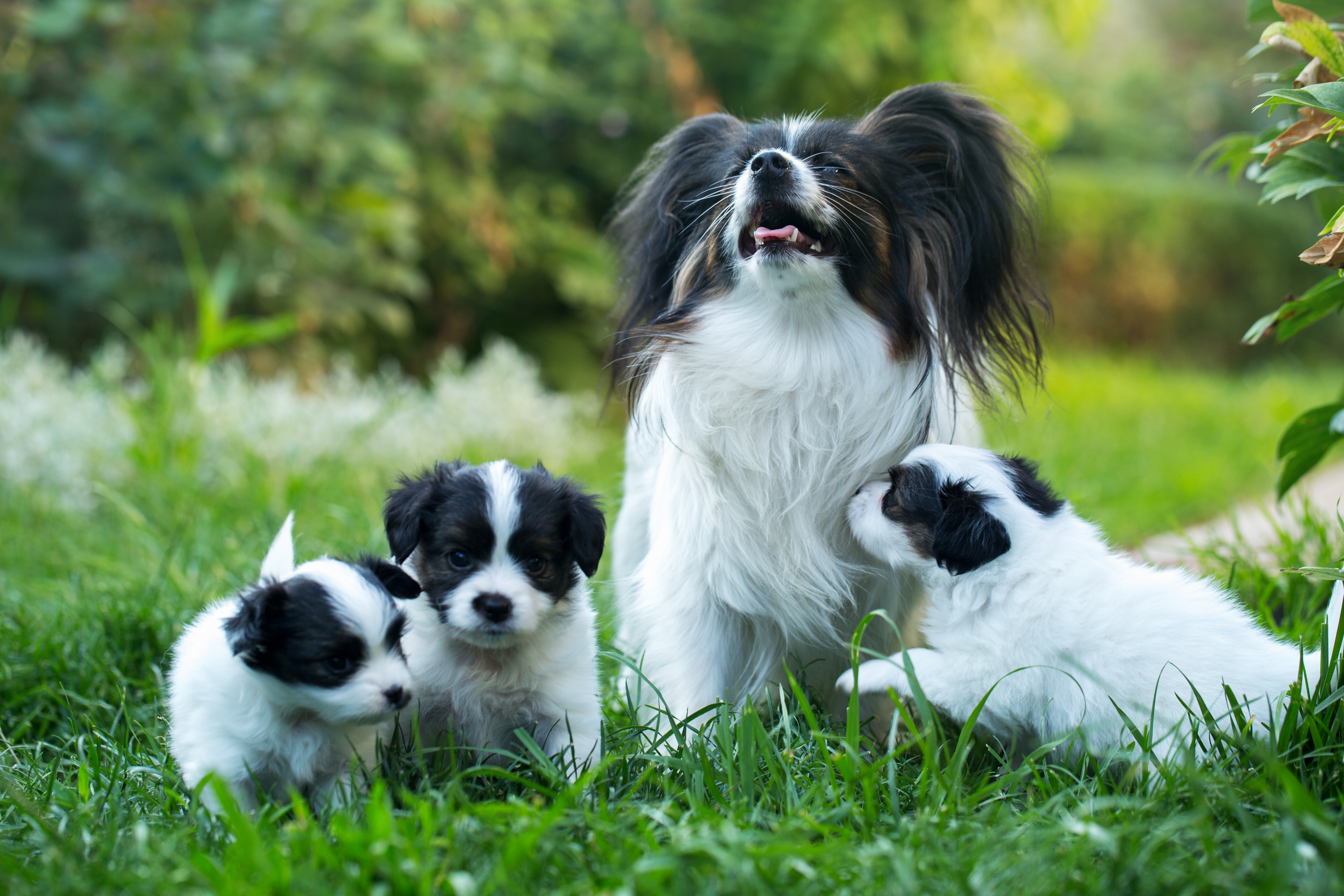 What Happens When A Mother Dog Breeds With The Son Cuteness