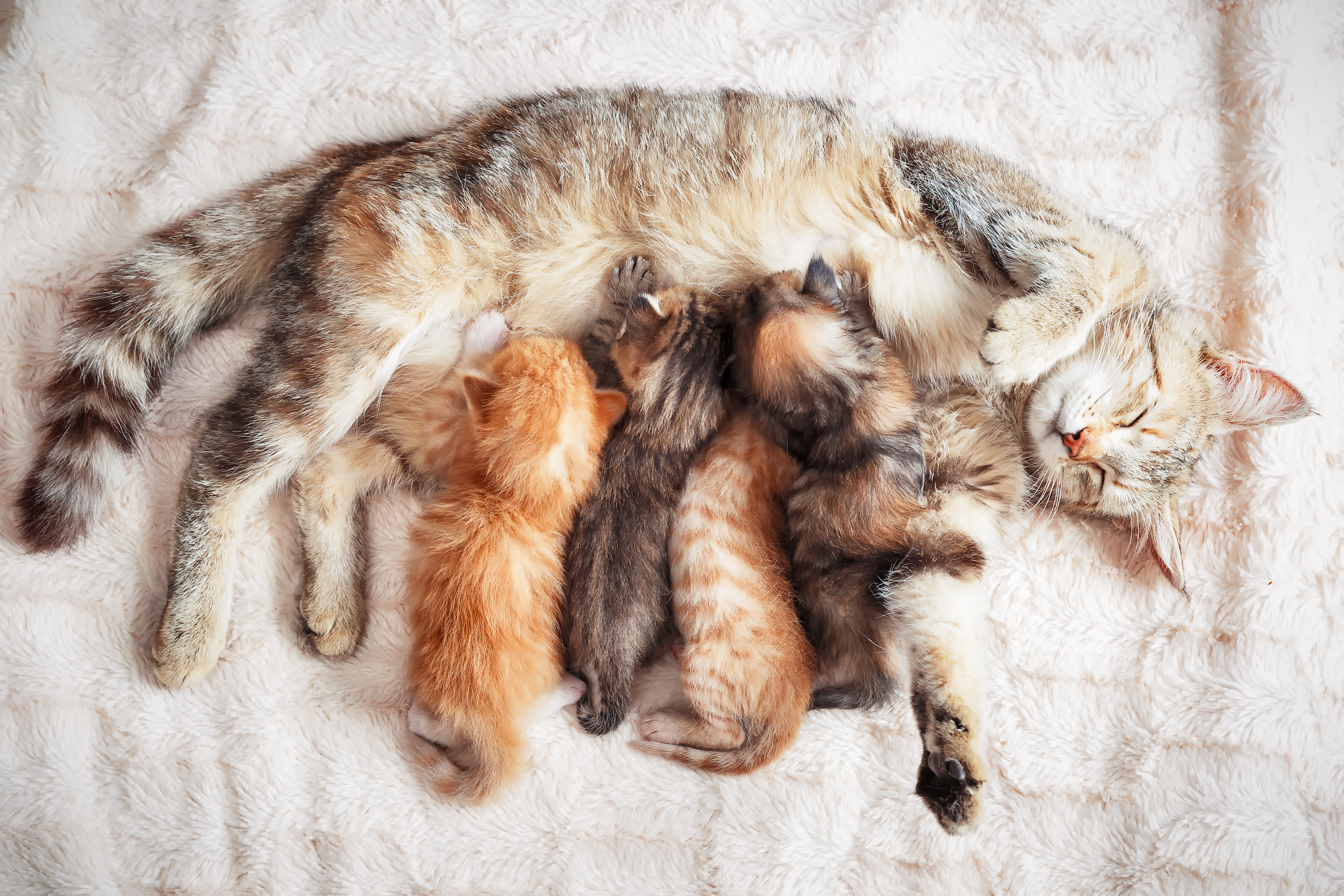 Behavior of a Mother Cat Who Just Gave Birth | Cuteness