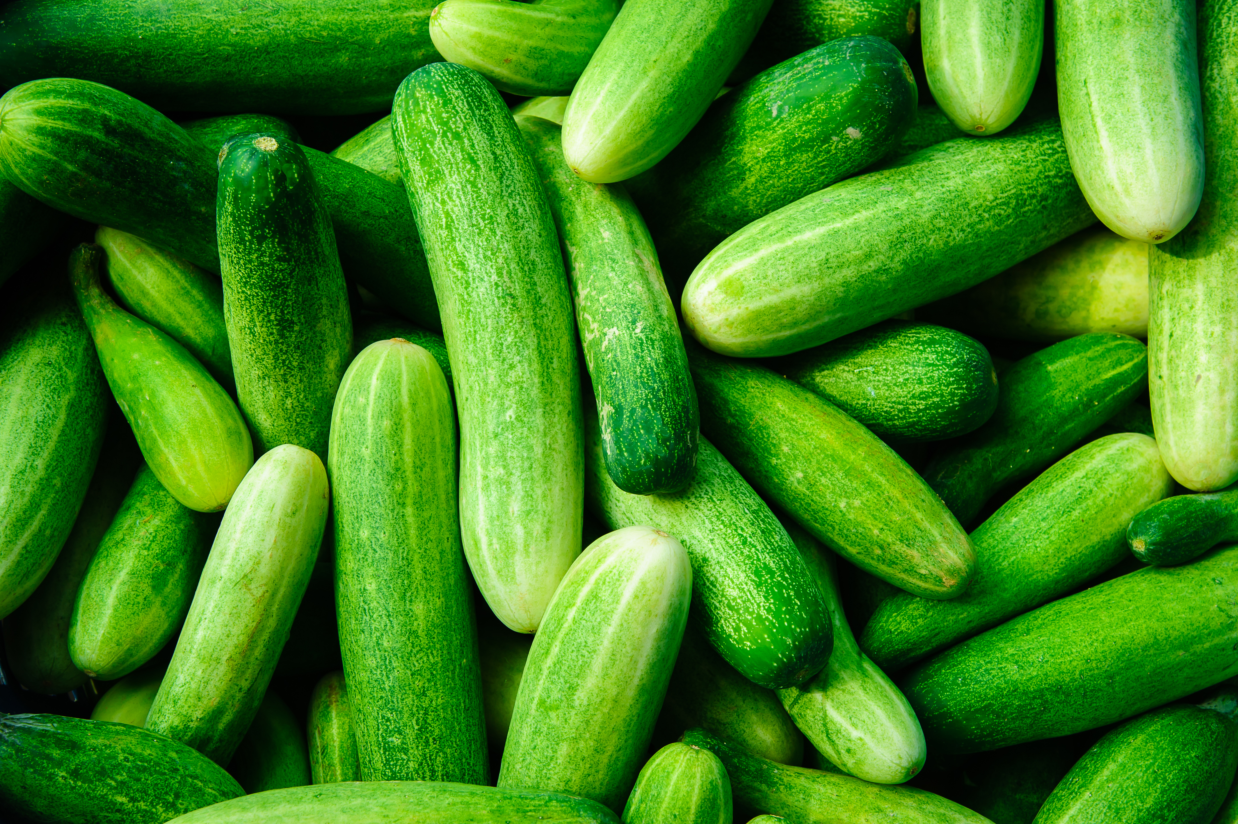 How long does it take for cucumbers to mature pic 434