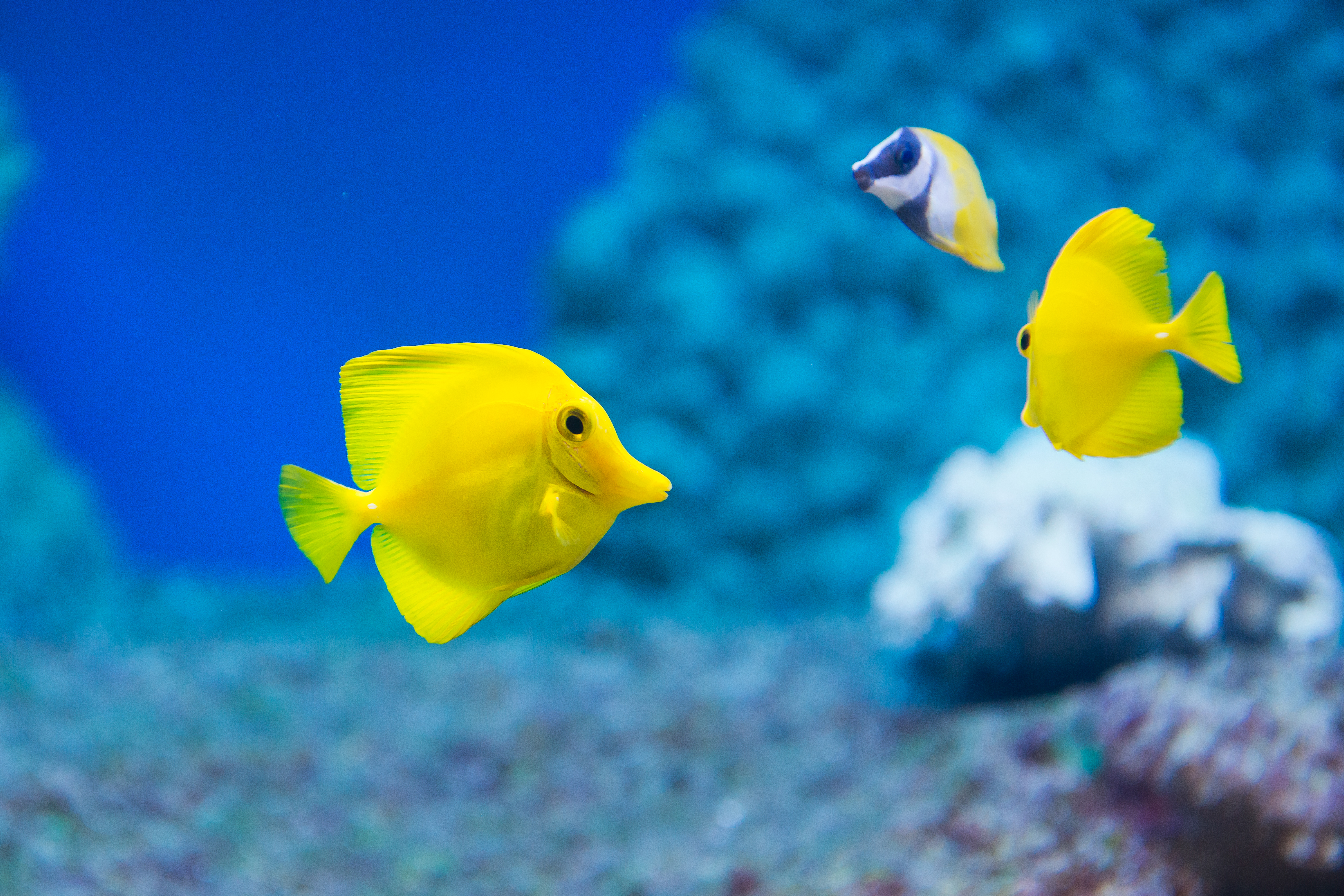 5 Characteristics That All Fish Have in Common | Sciencing