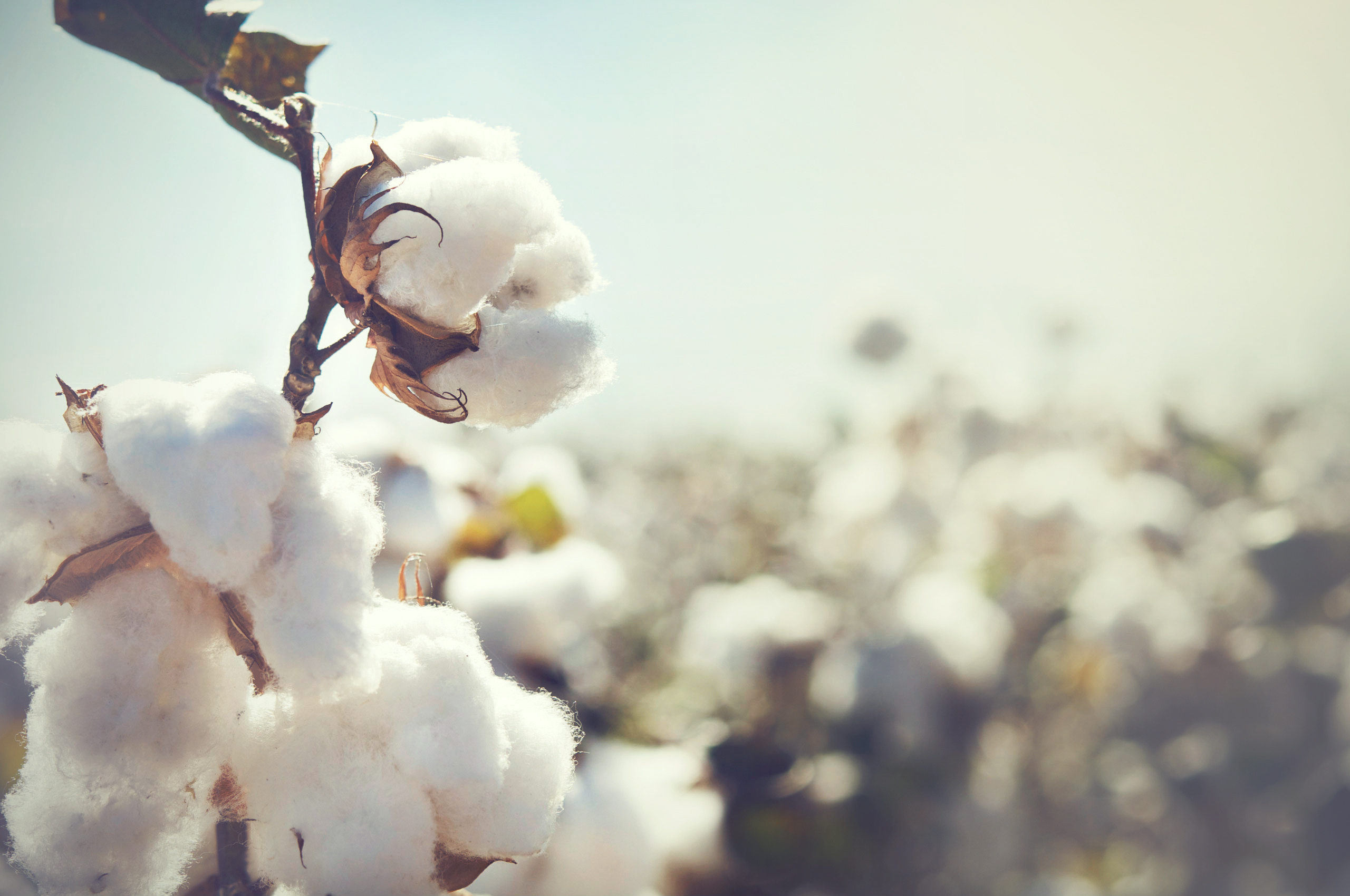 Difference Between Combed Cotton & Cotton