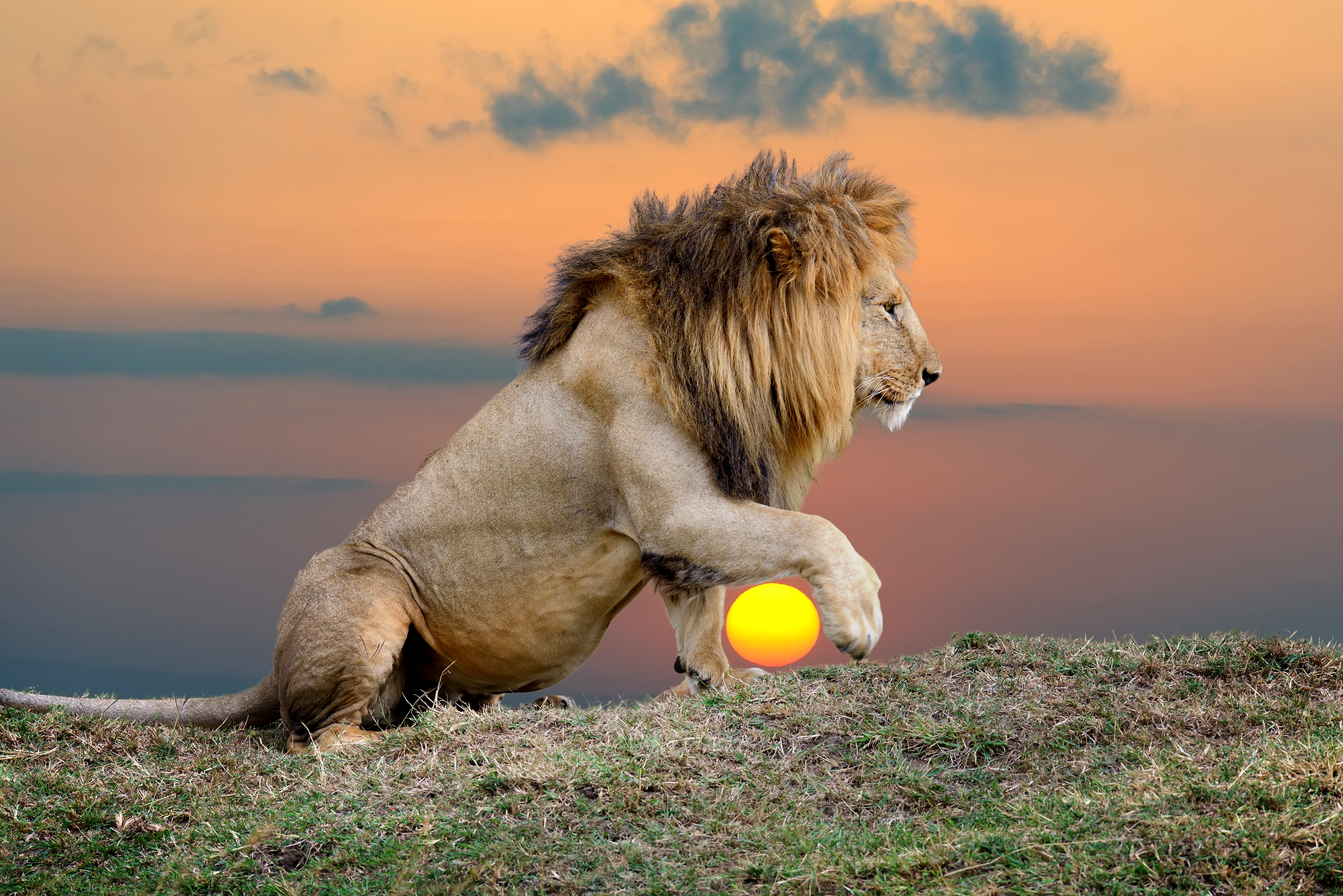 What Type Of Ecosystem Do Lions Live In
