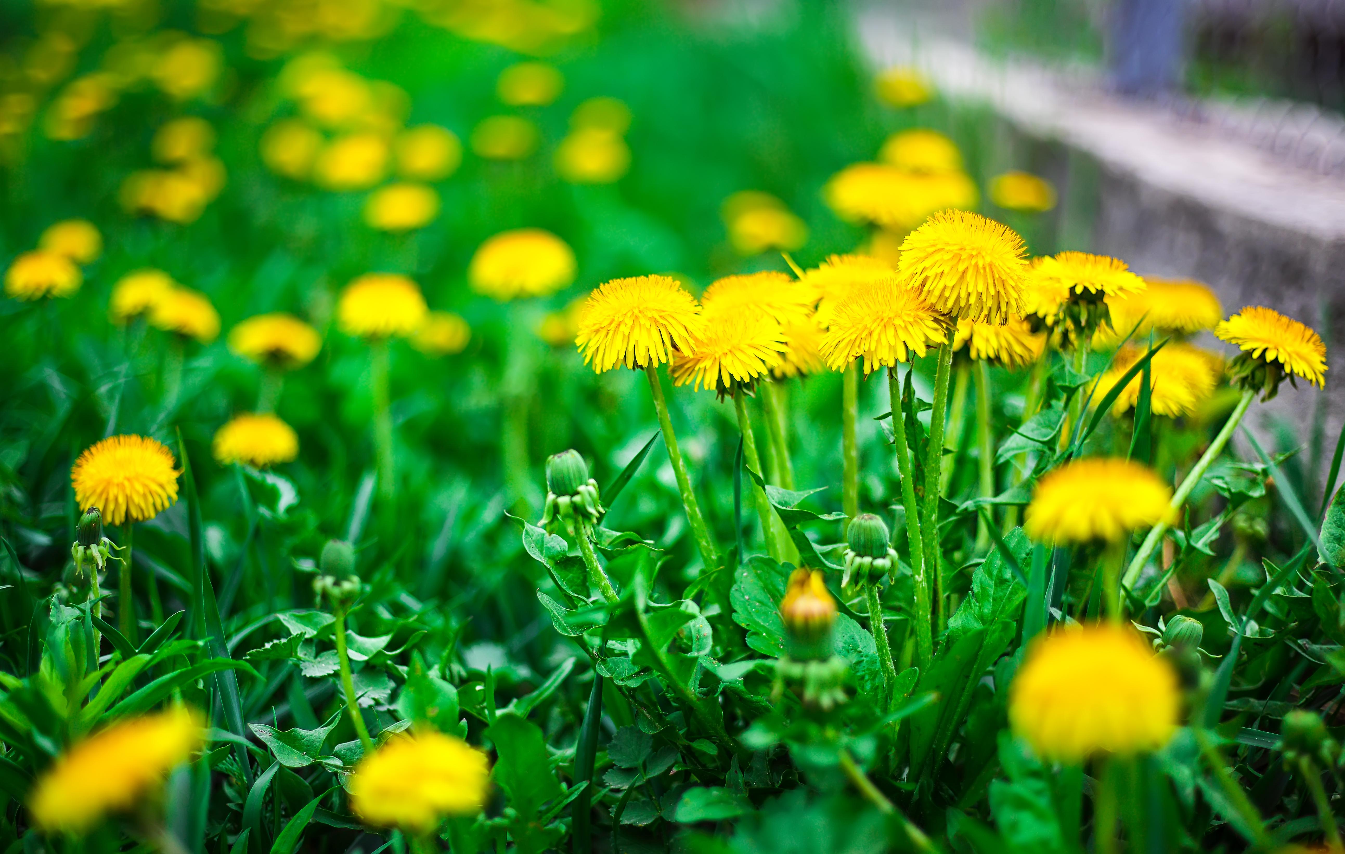 Will Vinegar Kill Trees & Grass? | Home Guides | SF Gate
