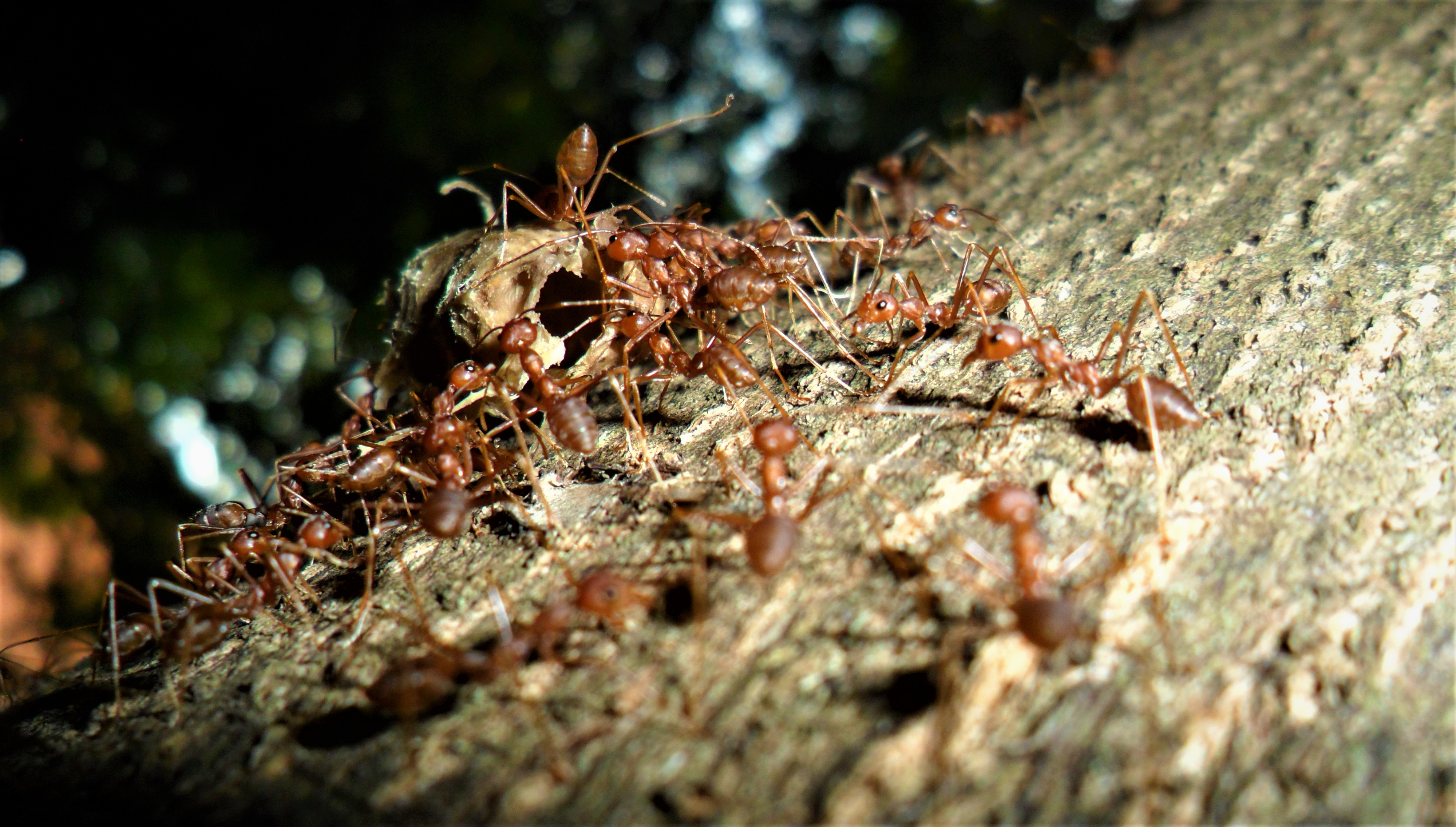 What Causes Swarming Ants