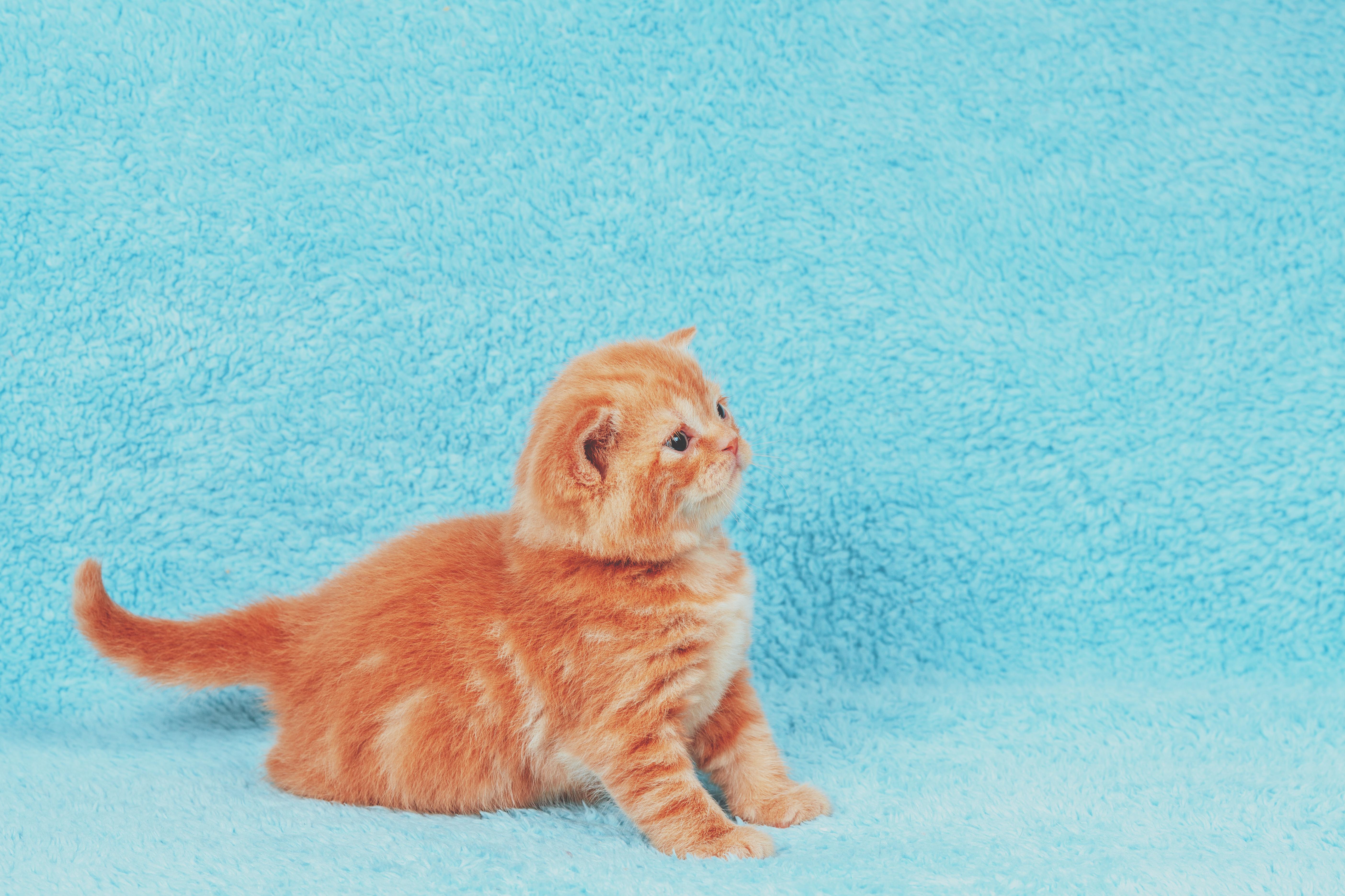 106 Tan Cat Names Cuteness