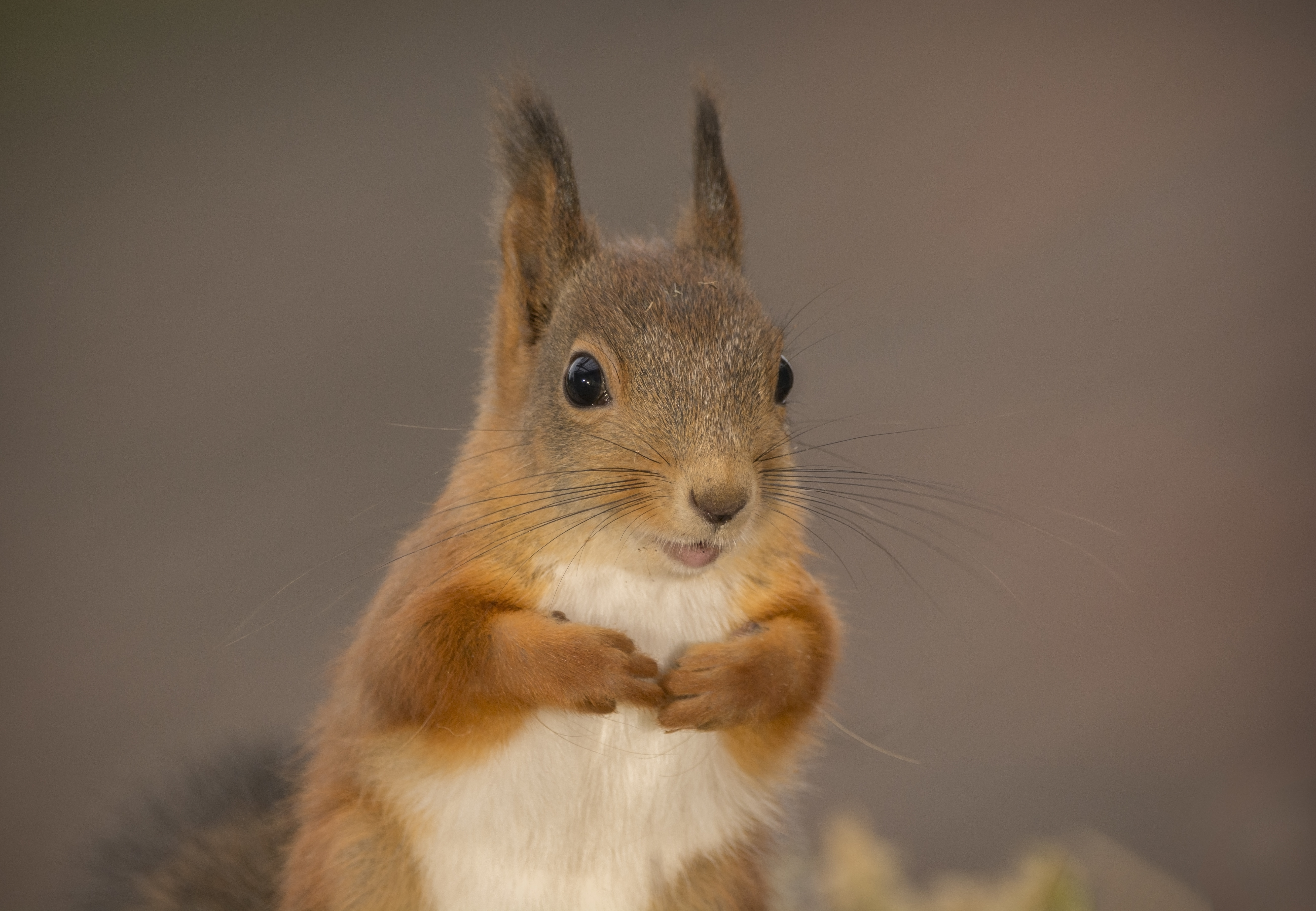 What Pepper Do You Put on Seed So Squirrels Will Not Eat It? | Home