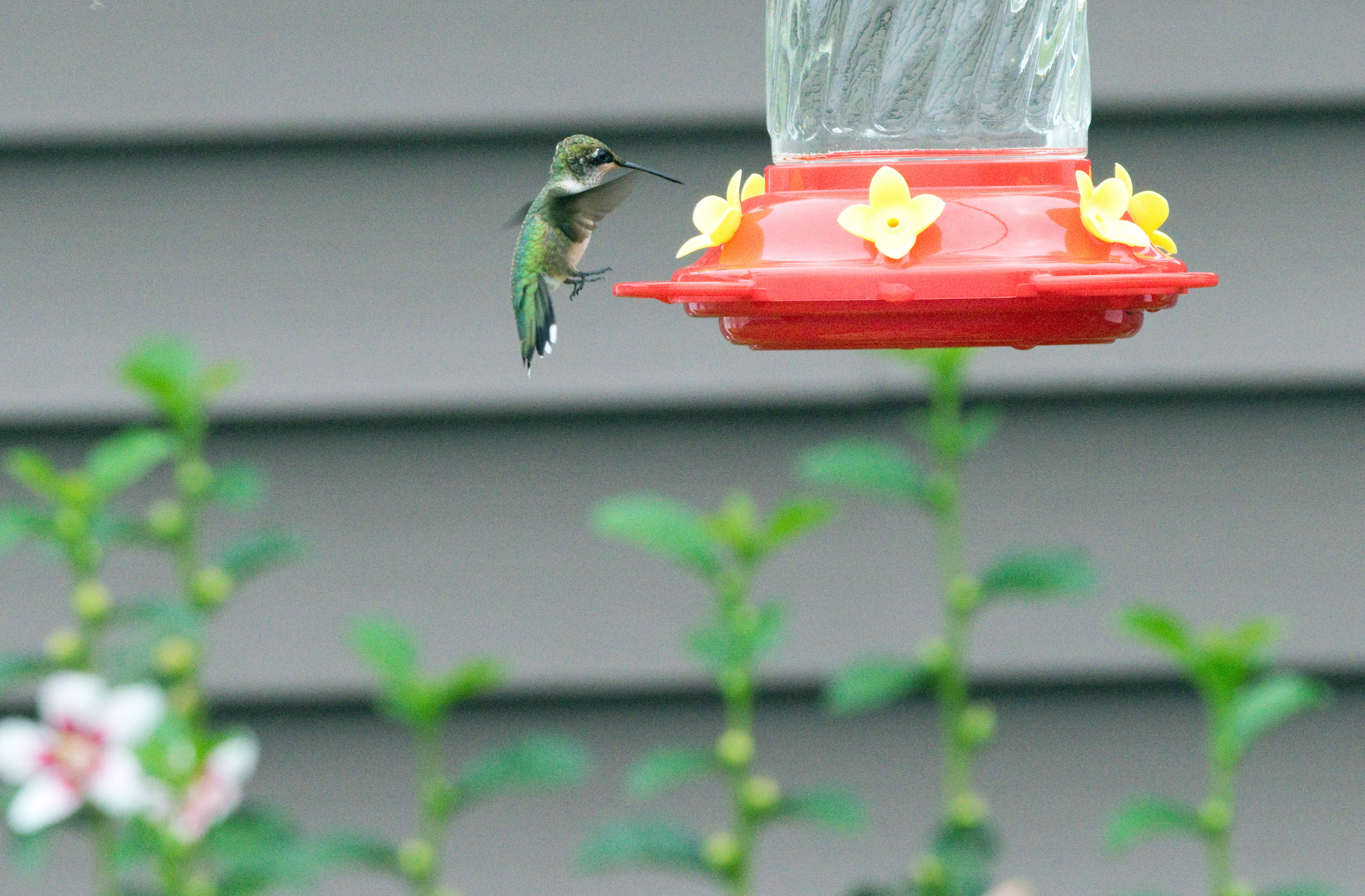 The Best Place To Put Hummingbird Feeders In The Yard Home Guides Sf Gate,How To Make Sweet Potato Pie From Scratch