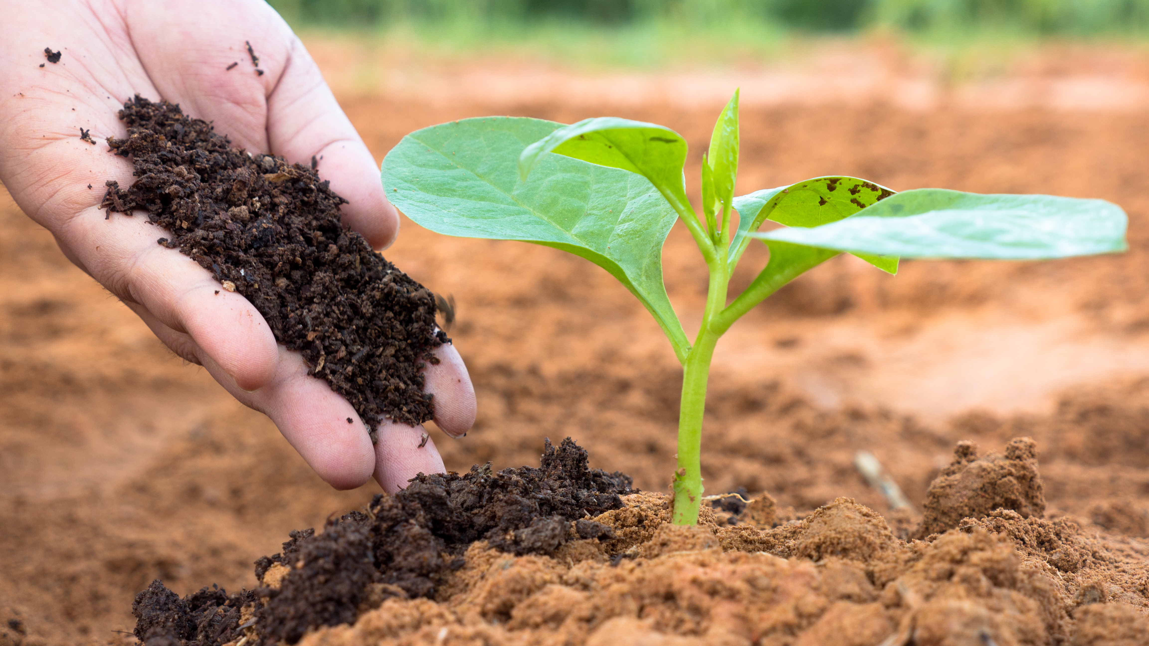 The Effects of Too Much Nitrogen in Plants | Home Guides