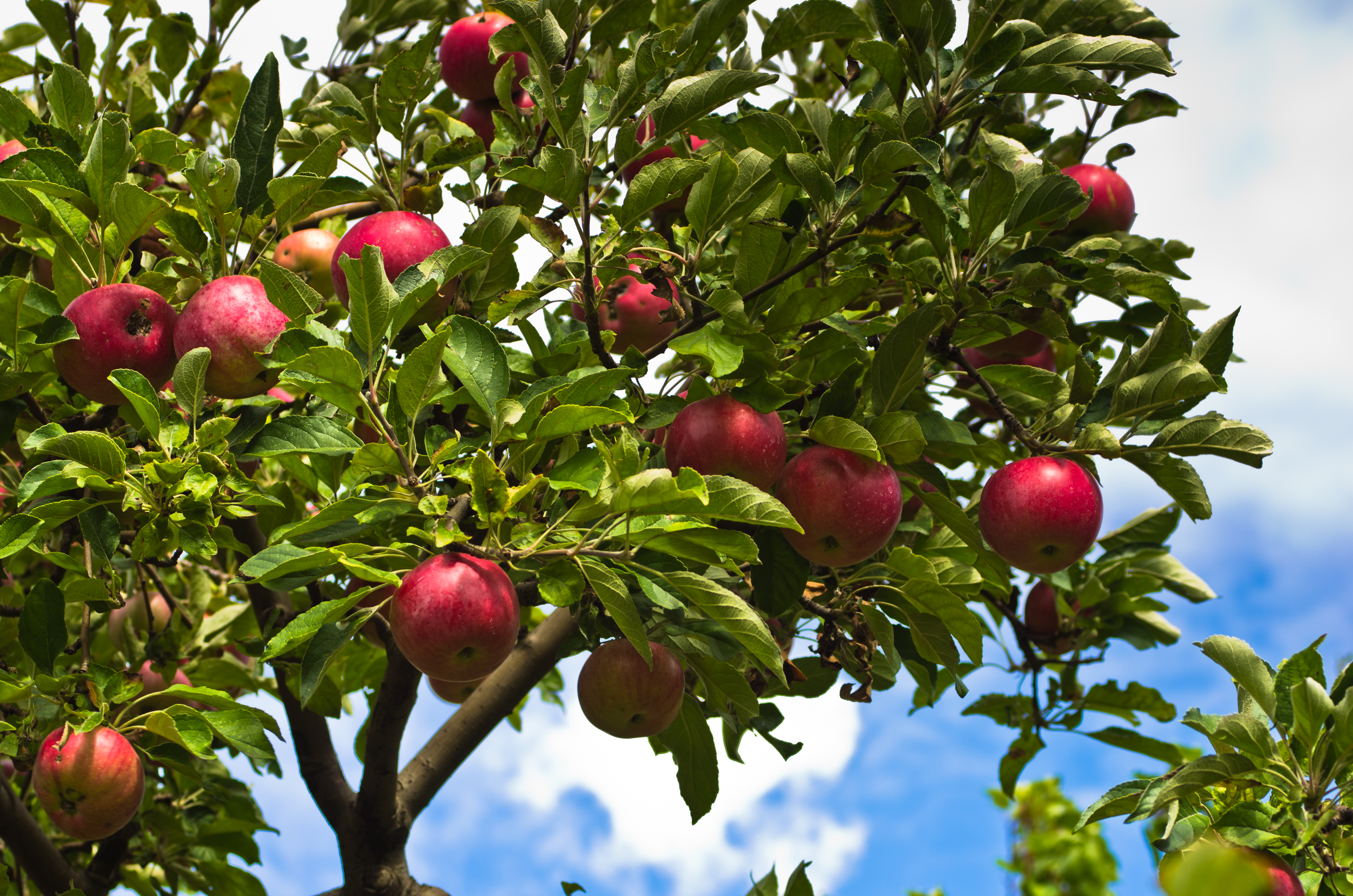 List Of Fruit Bearing Trees Hunker