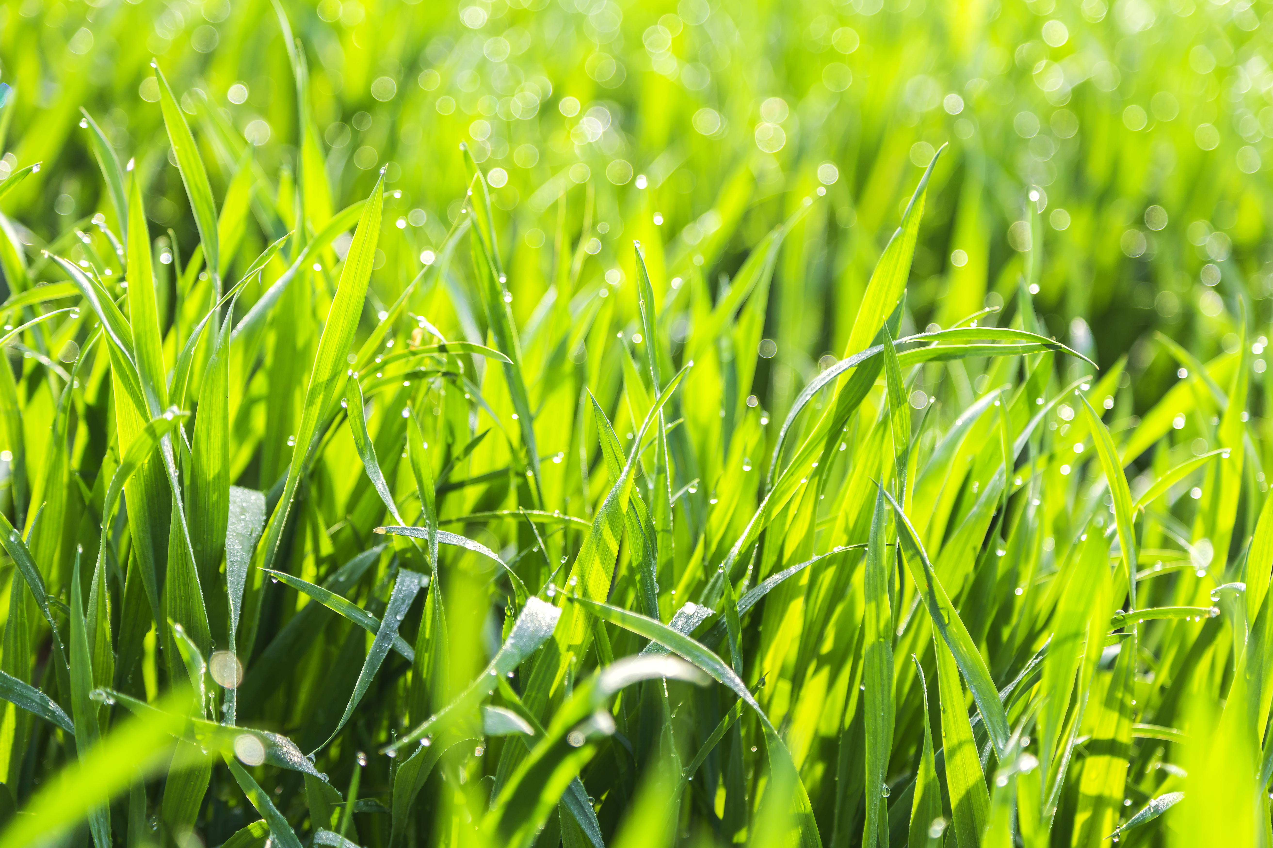 When Is it Too Late to Plant Grass? | Home Guides | SF Gate