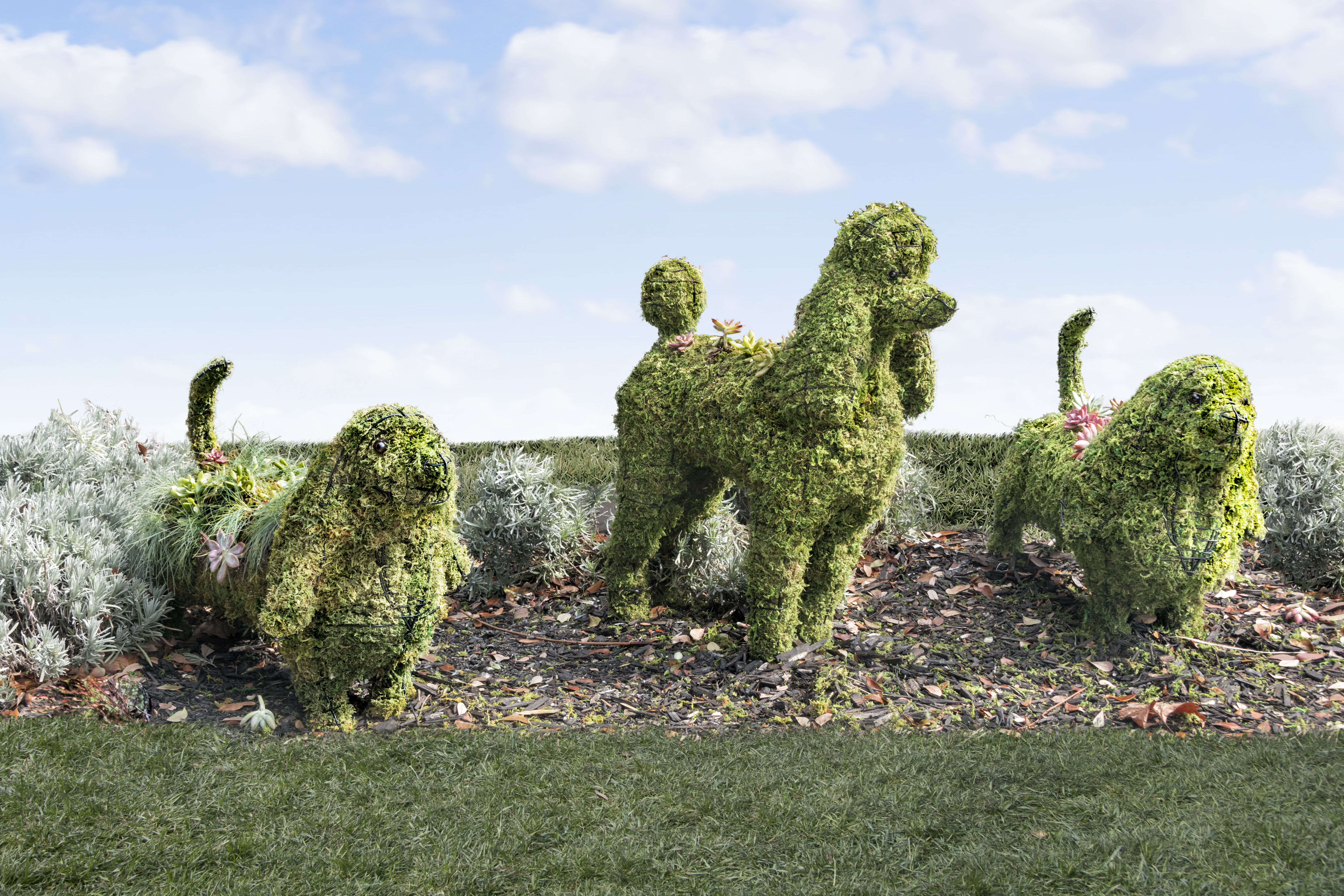 Which Plants Make The Best Topiaries