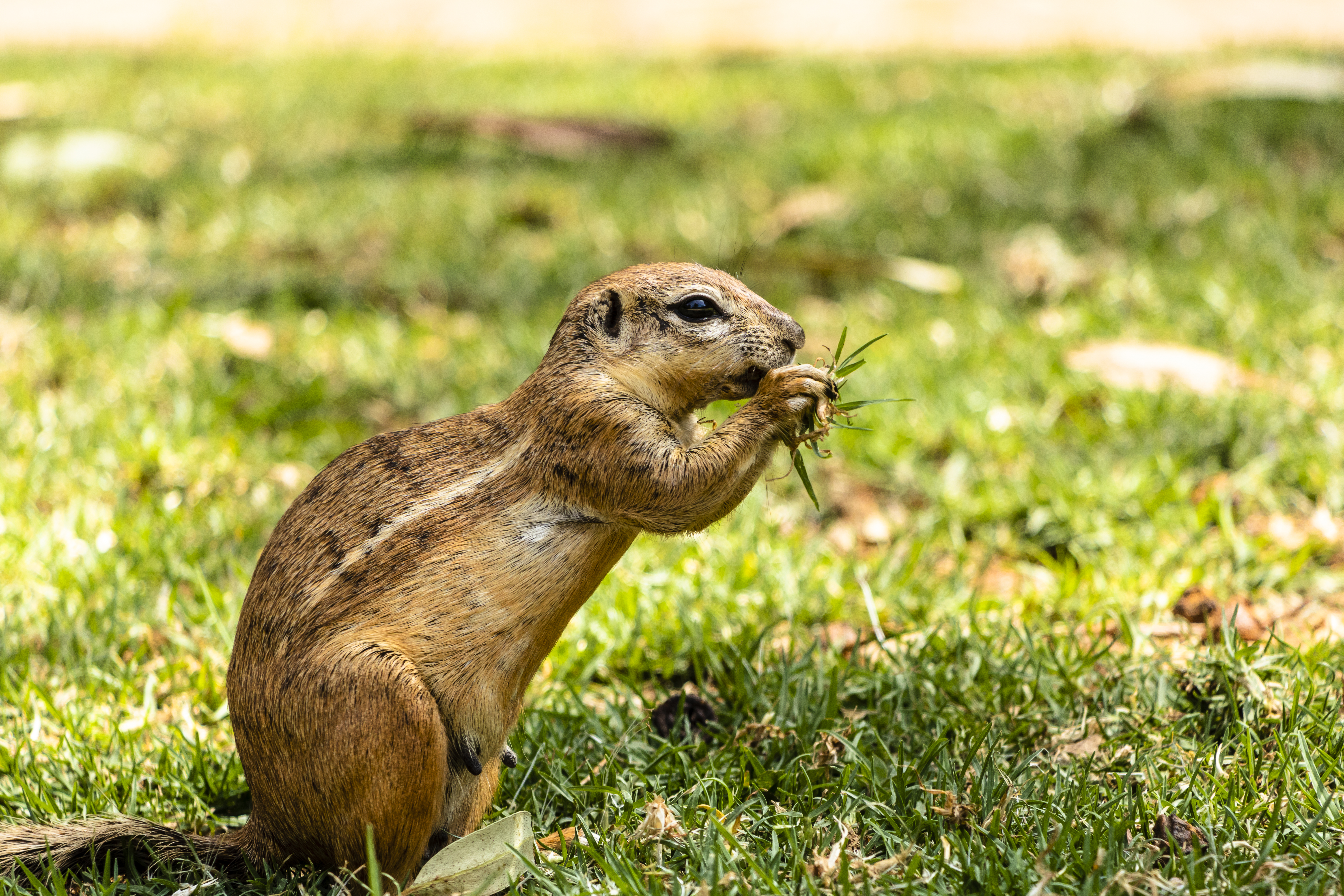 Smells That Squirrels Do Not Like | Home Guides | SF Gate