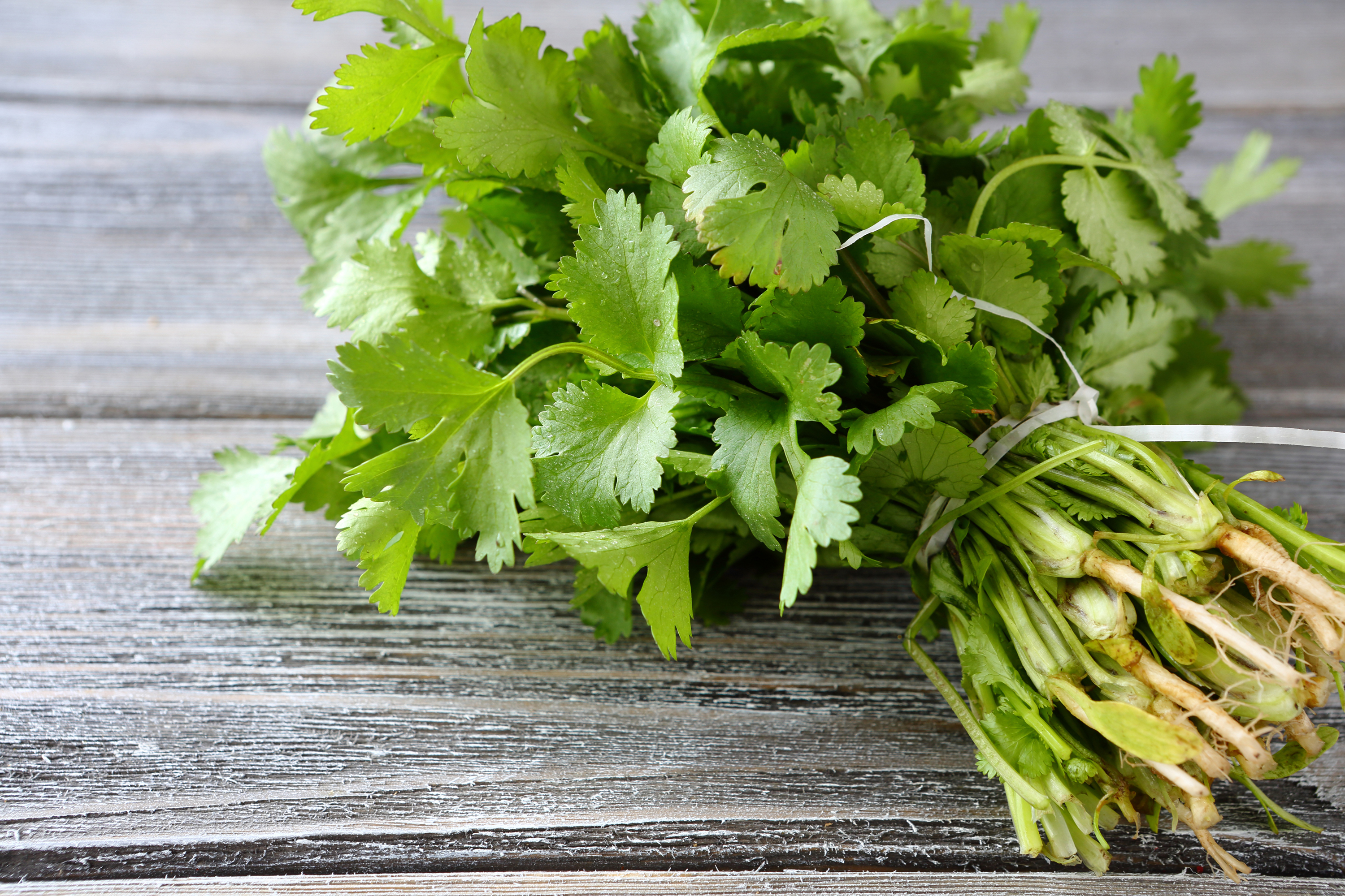 What Does Cilantro Do For The Body Healthy Eating Sf Gate