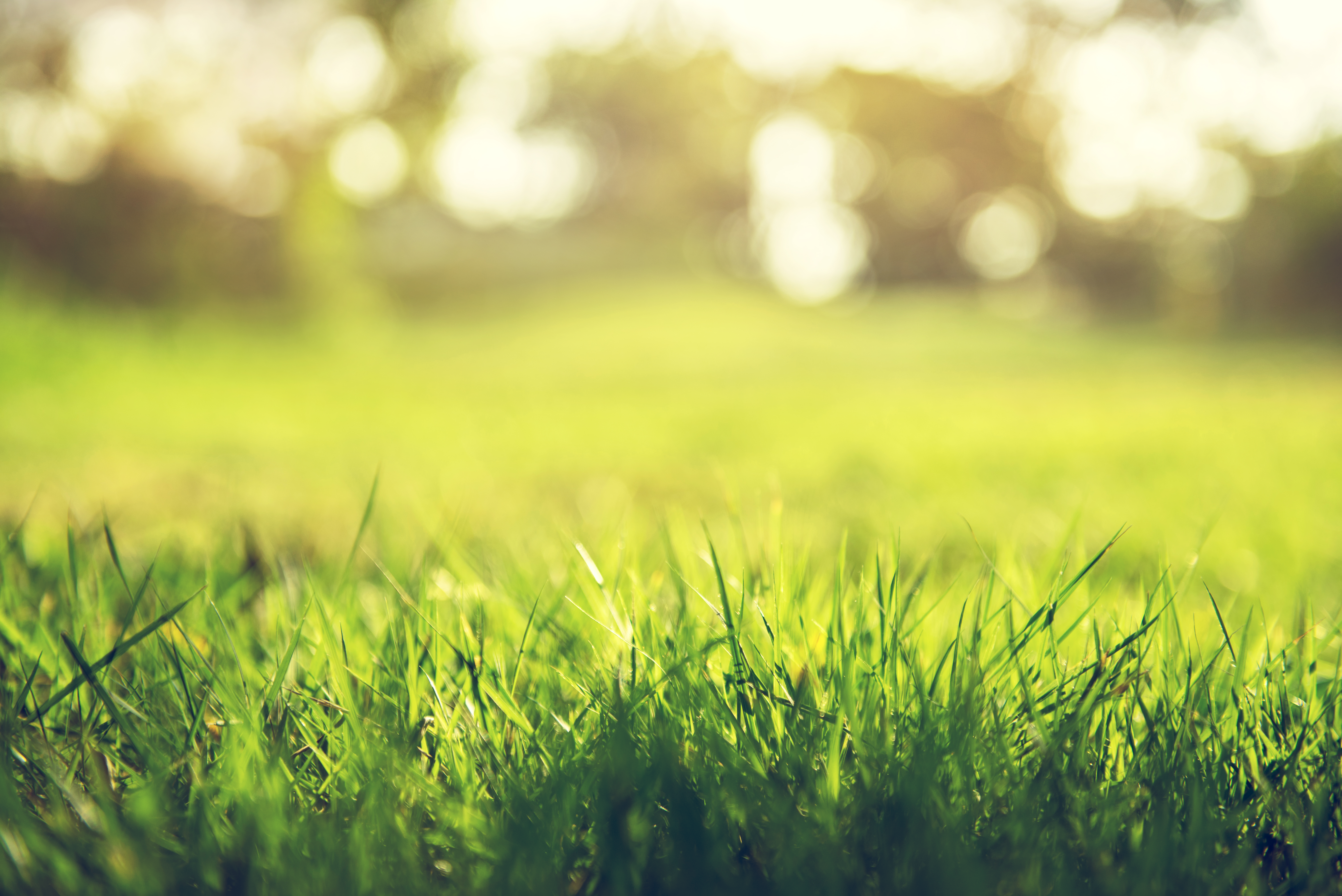 How to Kill Grass With Bleach | Home Guides | SF Gate