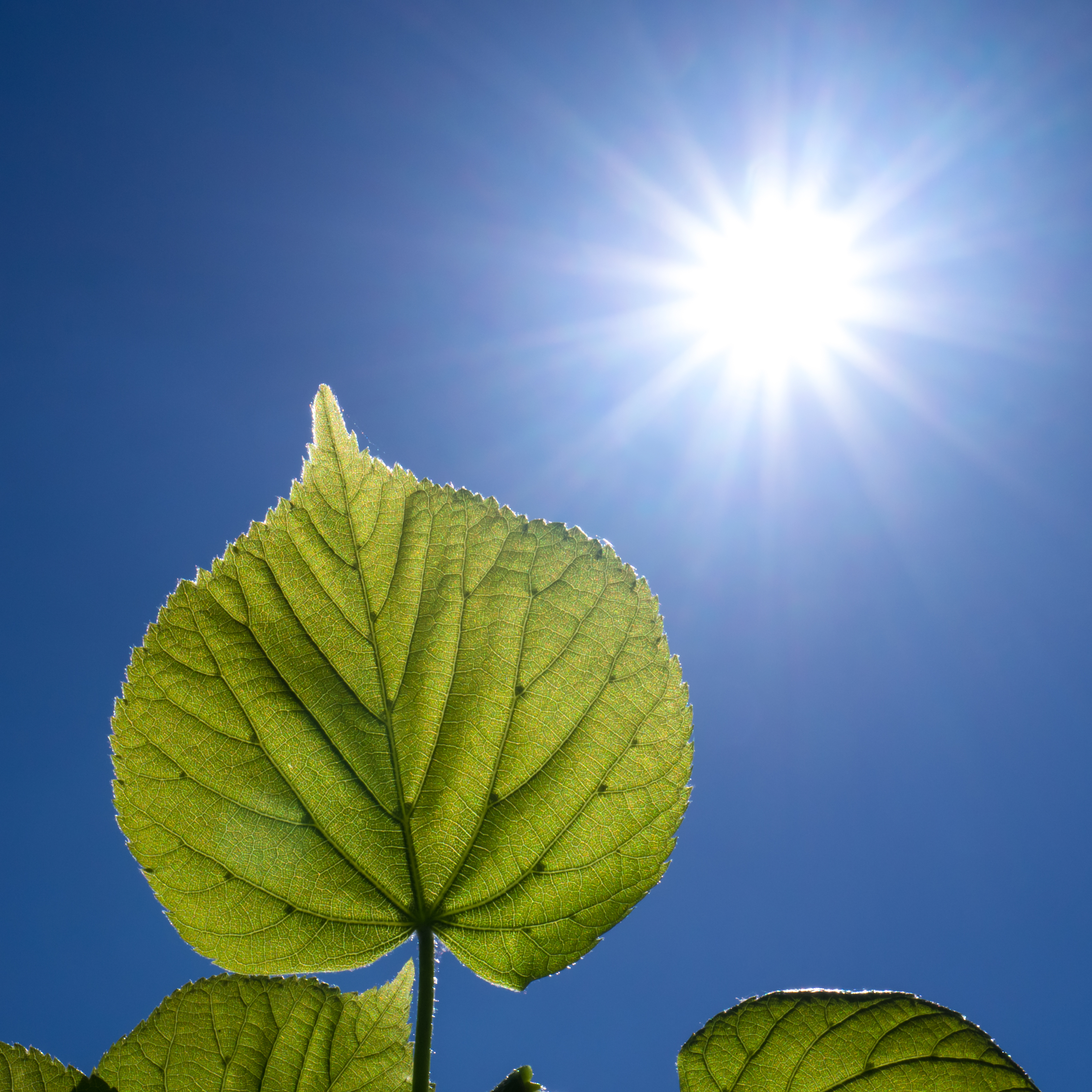 Comparison between photosynthesis and respiration in plants