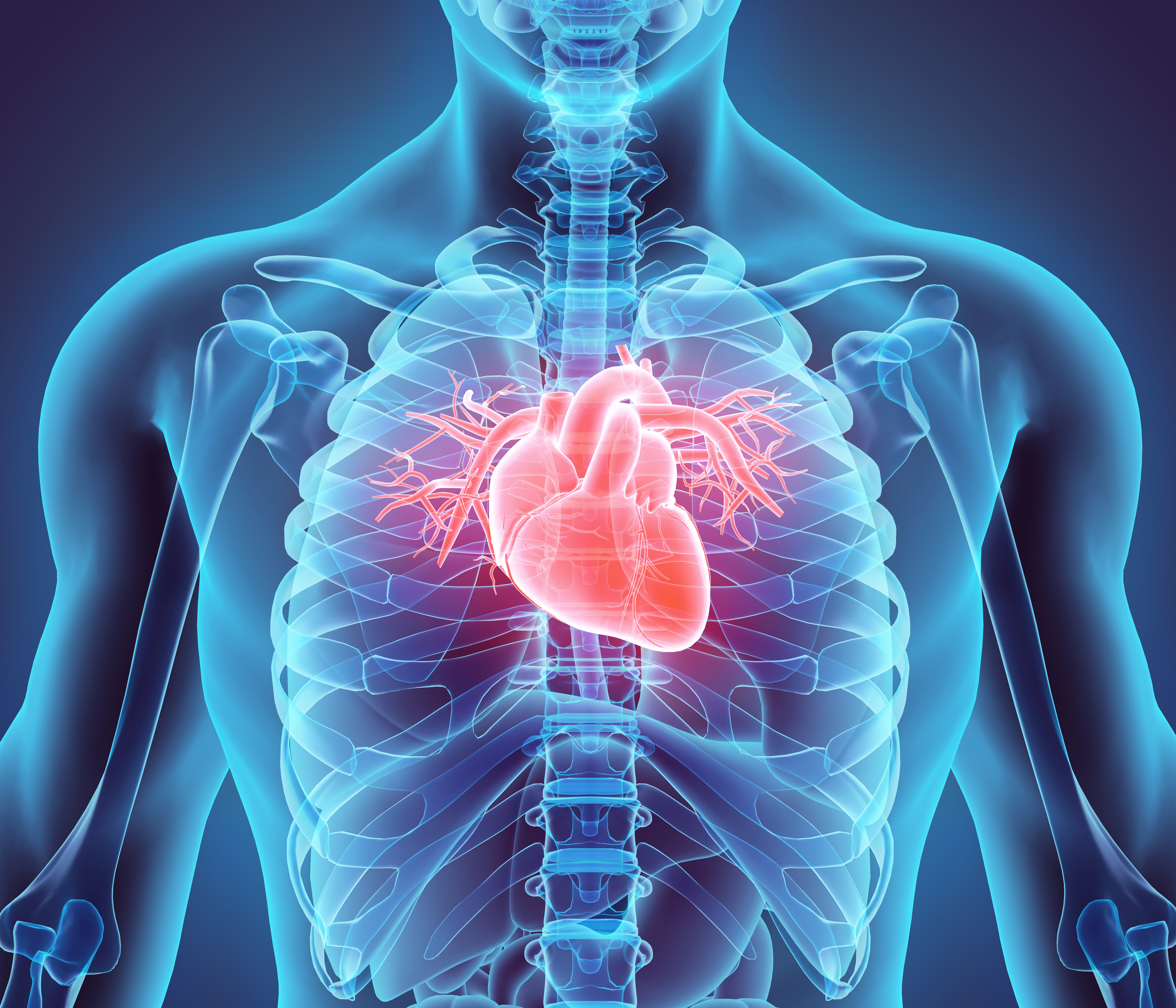 Structure Functions Of The Cardiovascular System Livestrong