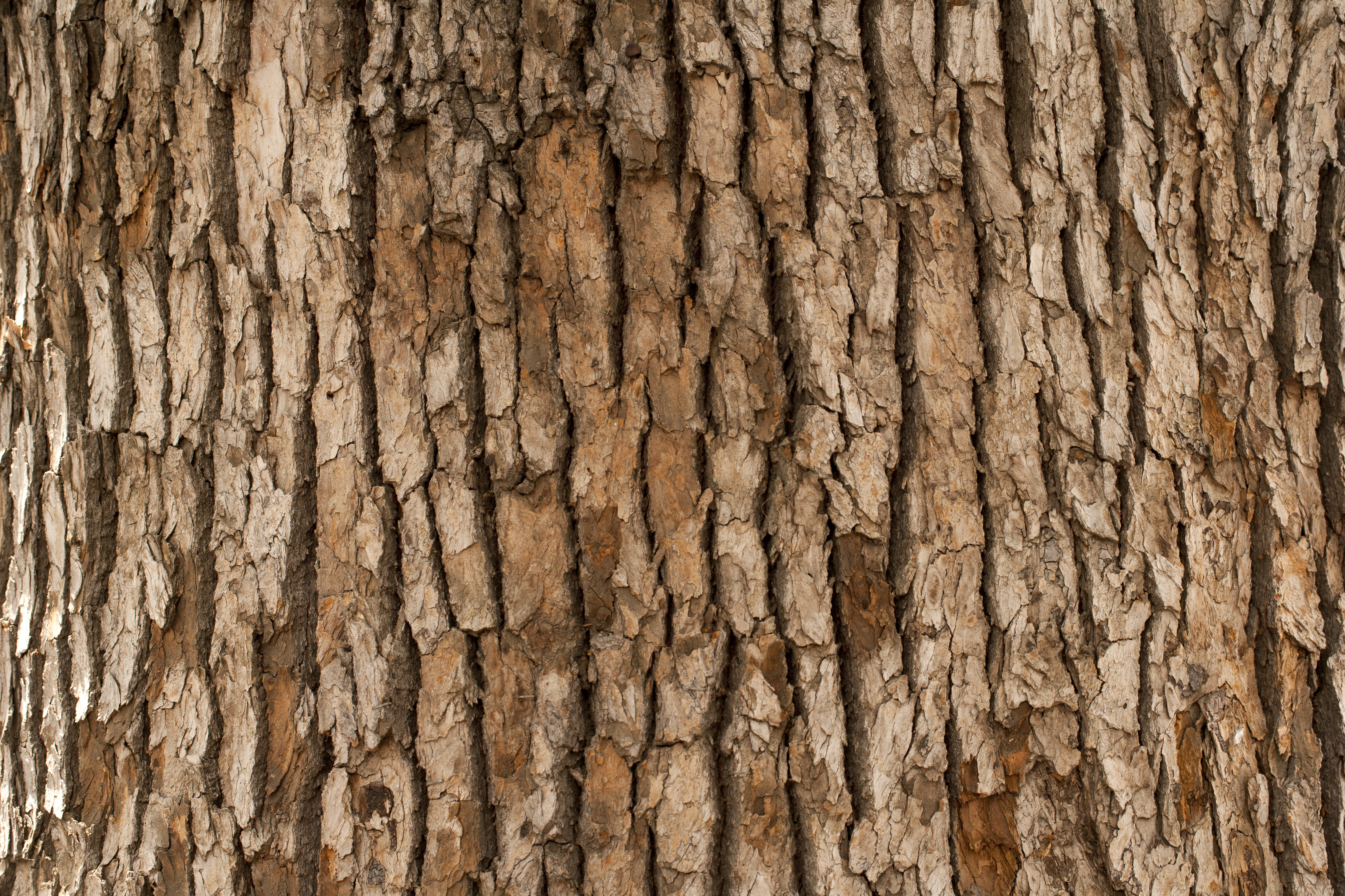 Why Does a Tree Lose Its Bark?...