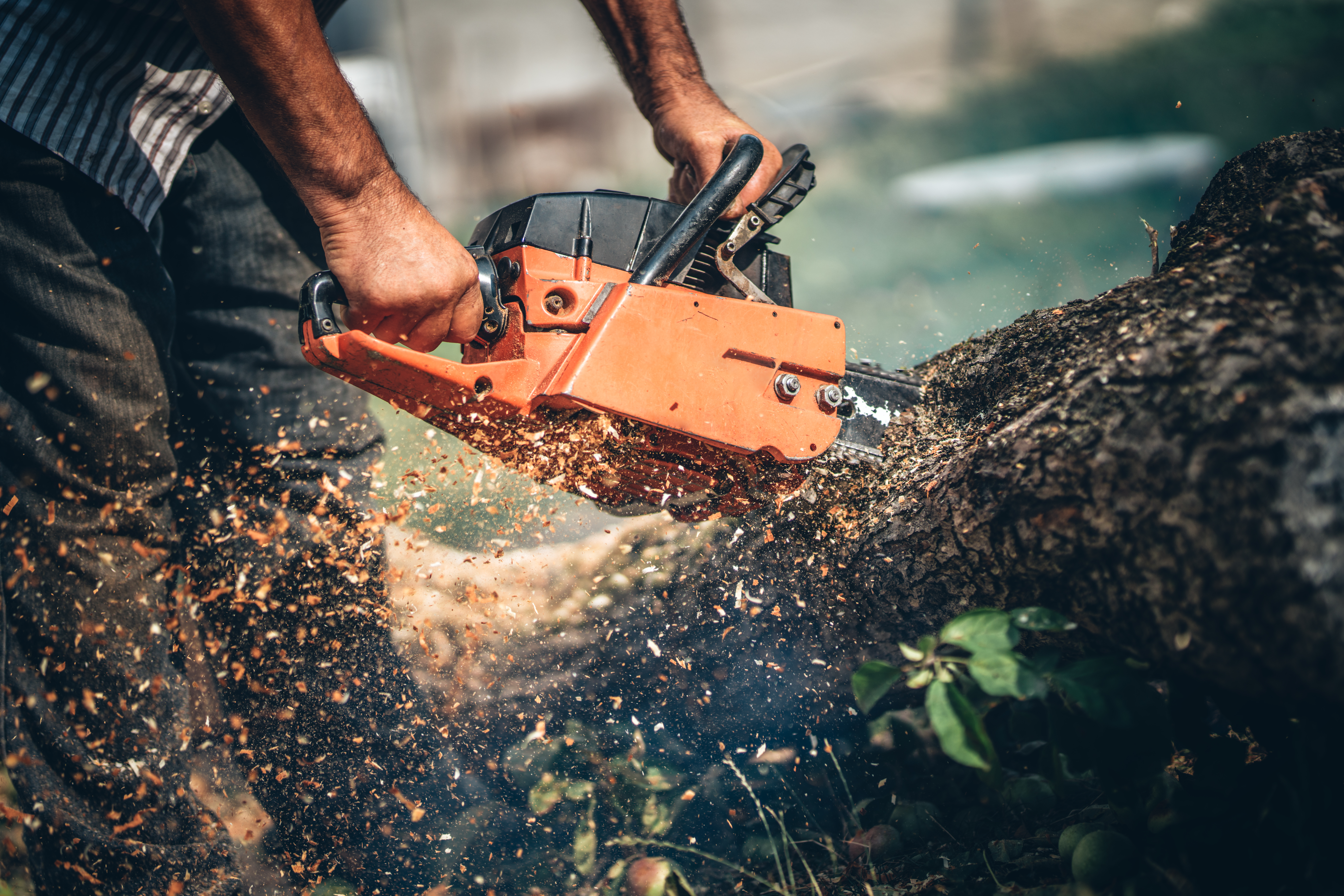 How To Troubleshoot And Adjust The Oiler On A Chainsaw | Hunker