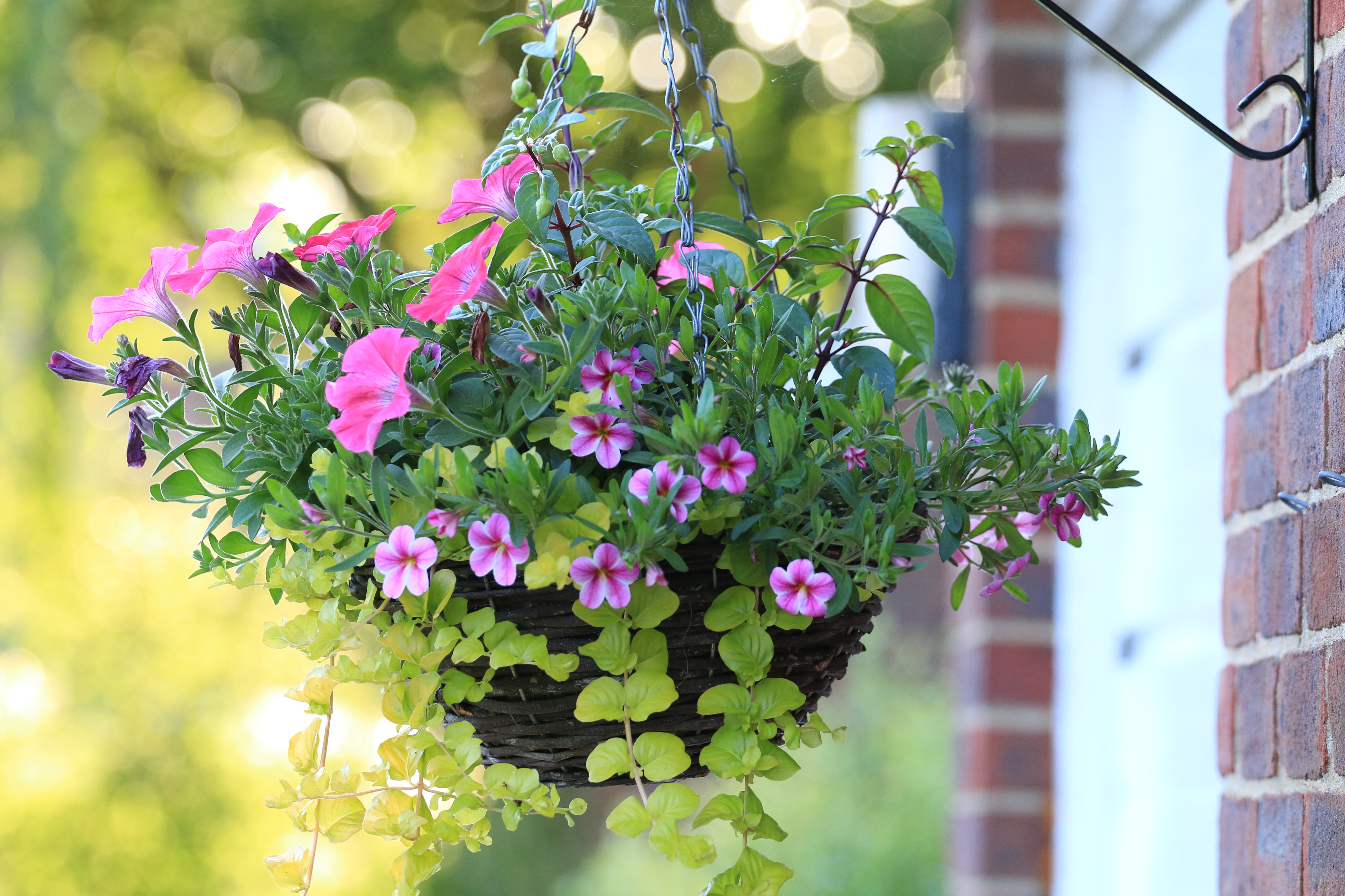 How to Install a Hook for a Hanging Plant Basket | Home Guides | SF Gate