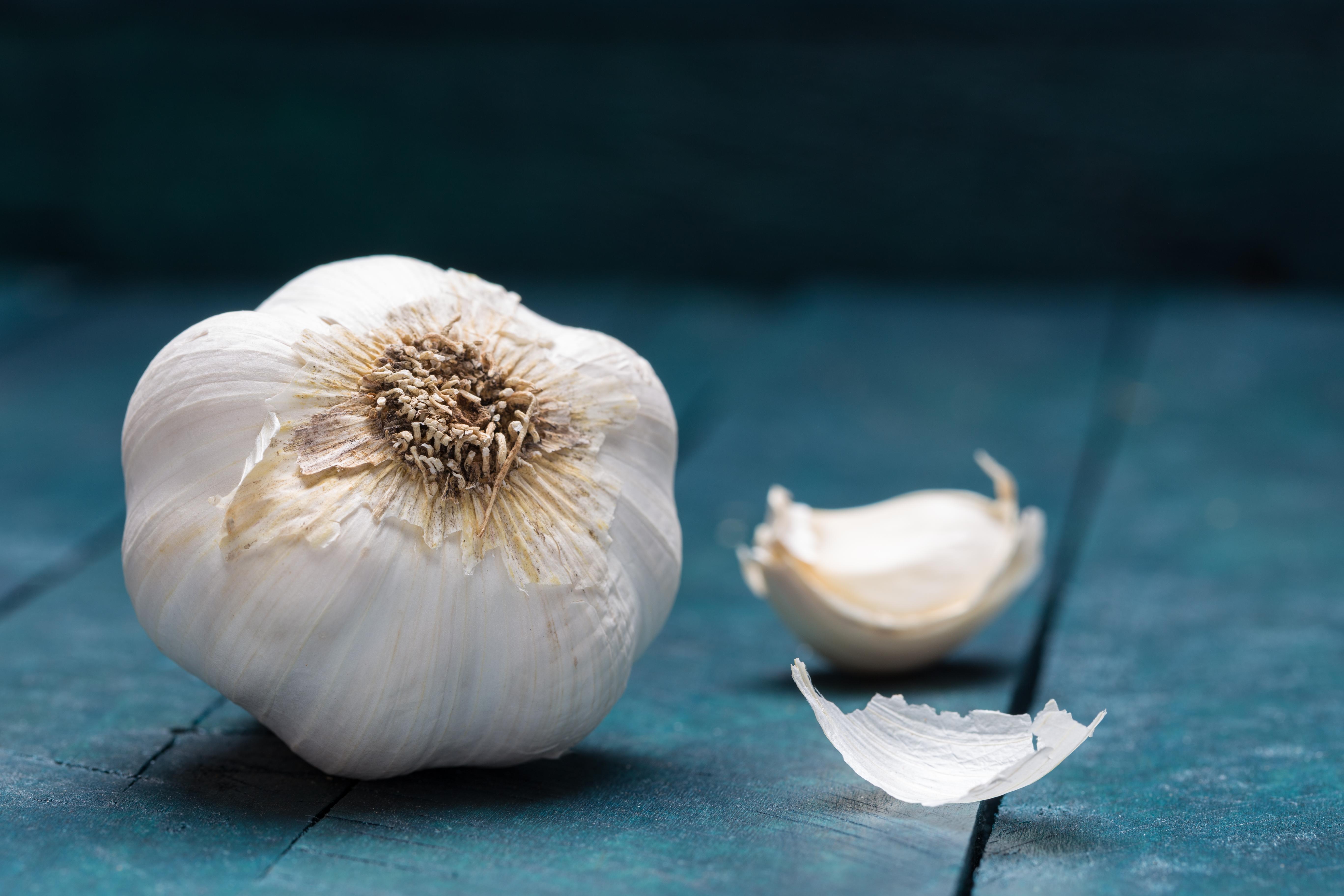 A Garlic Spray for Garden Pests