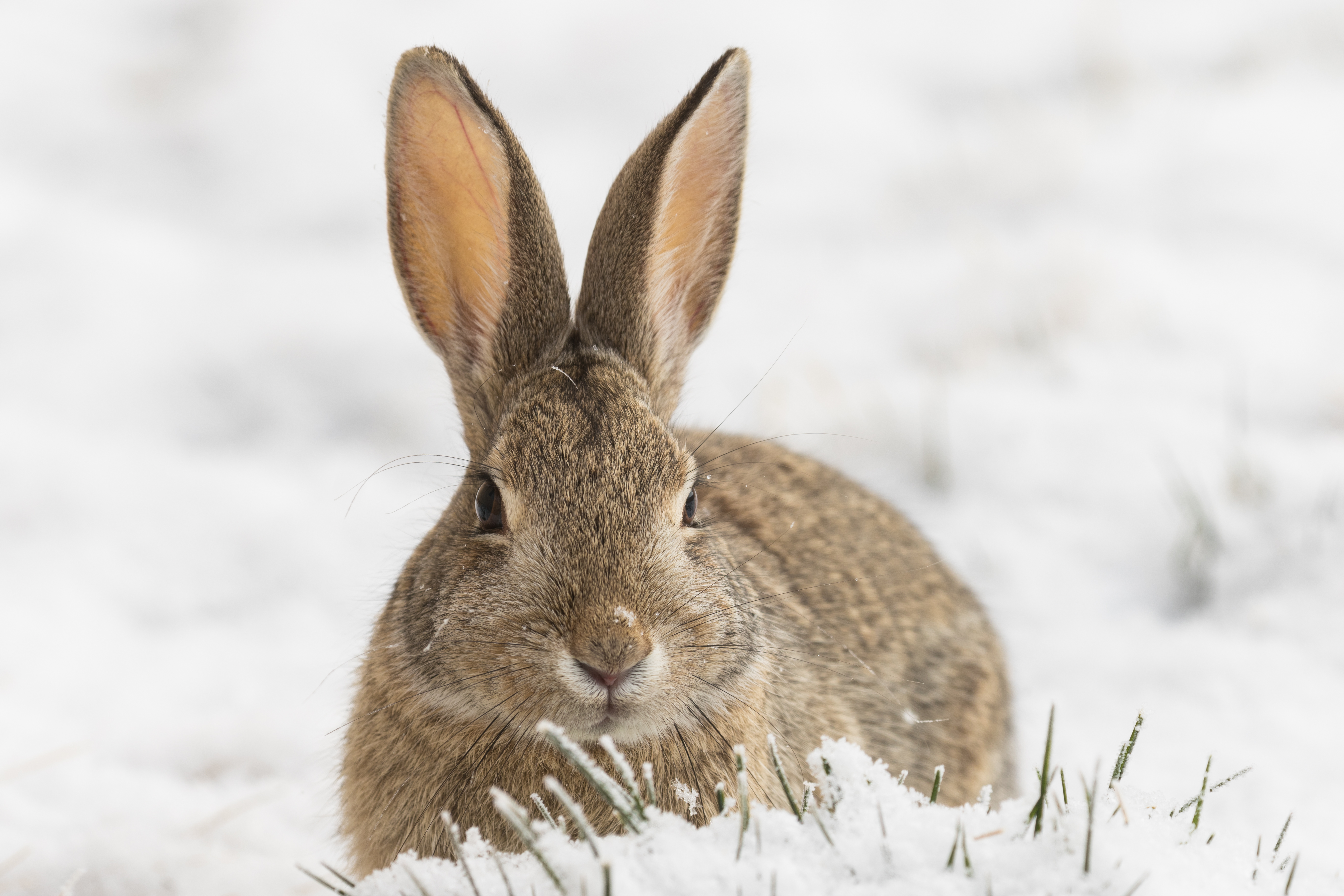 What to feed rabbits in the winter at home 9