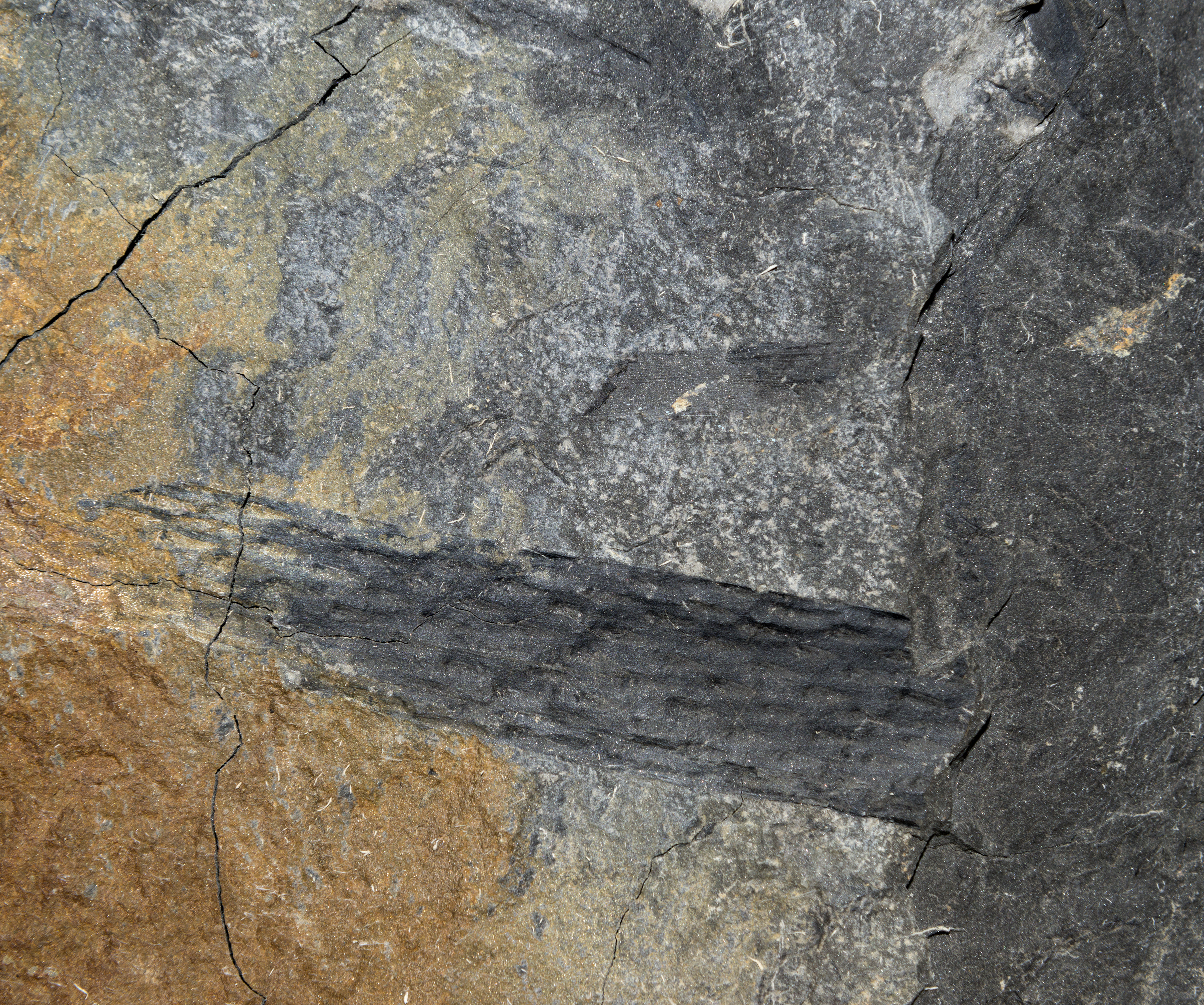 The Rock Most Likely to Contain Fossils