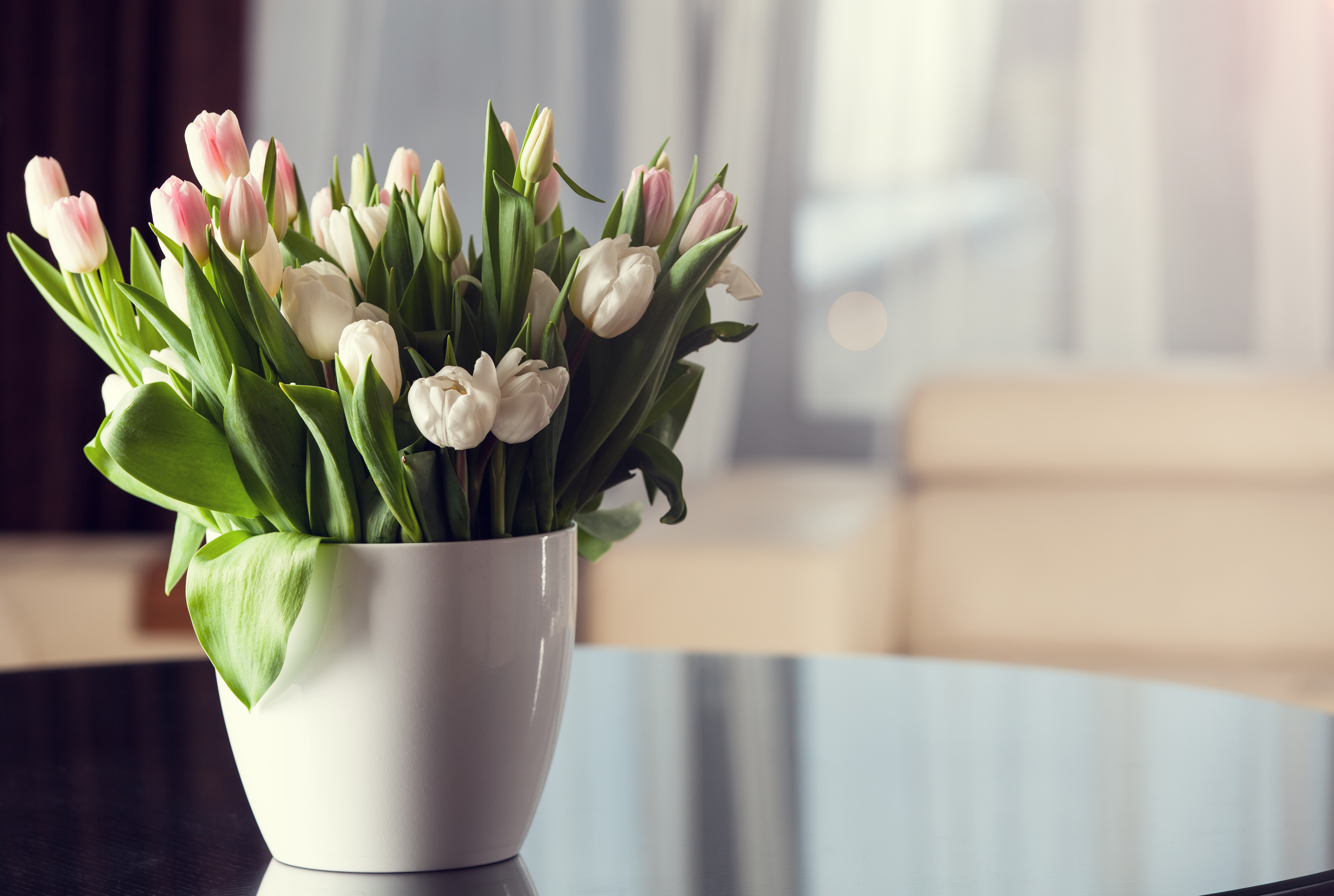 How To Take Care Of A Tulip Plant In A Pot Home Guides Sf Gate