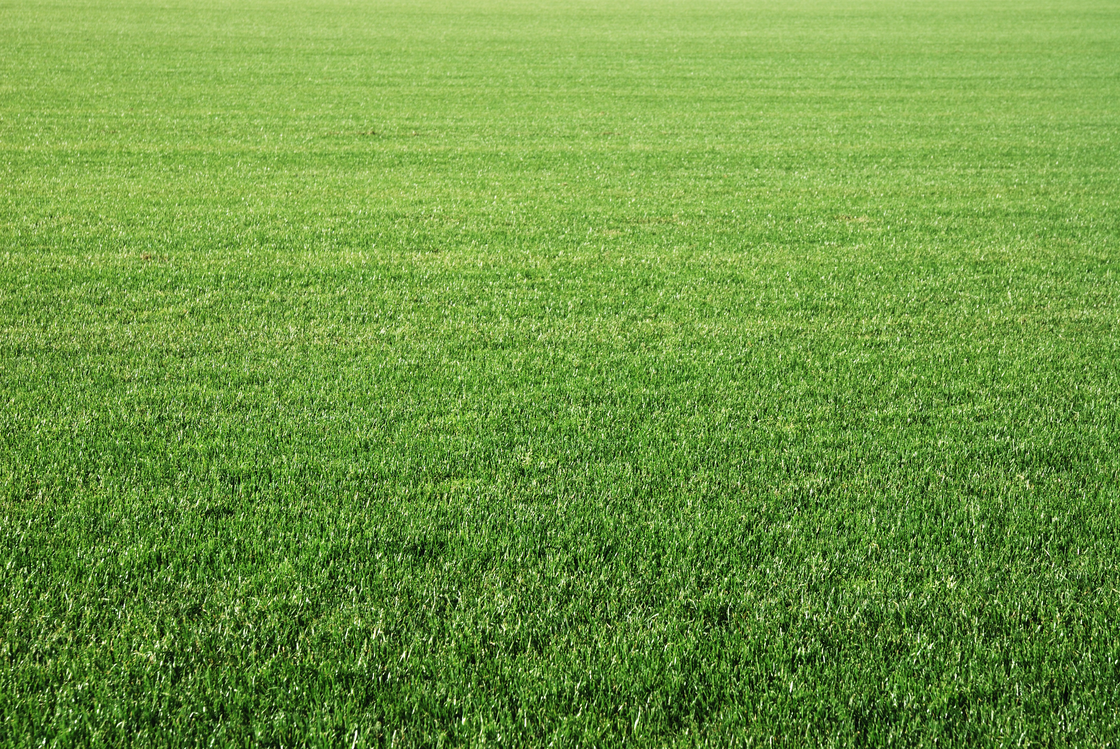 How Long After Grass Starts Growing Can You Cut It? | Home