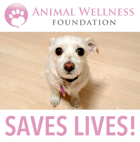 ANIMAL WELLNESS FOUNDATION's Photo