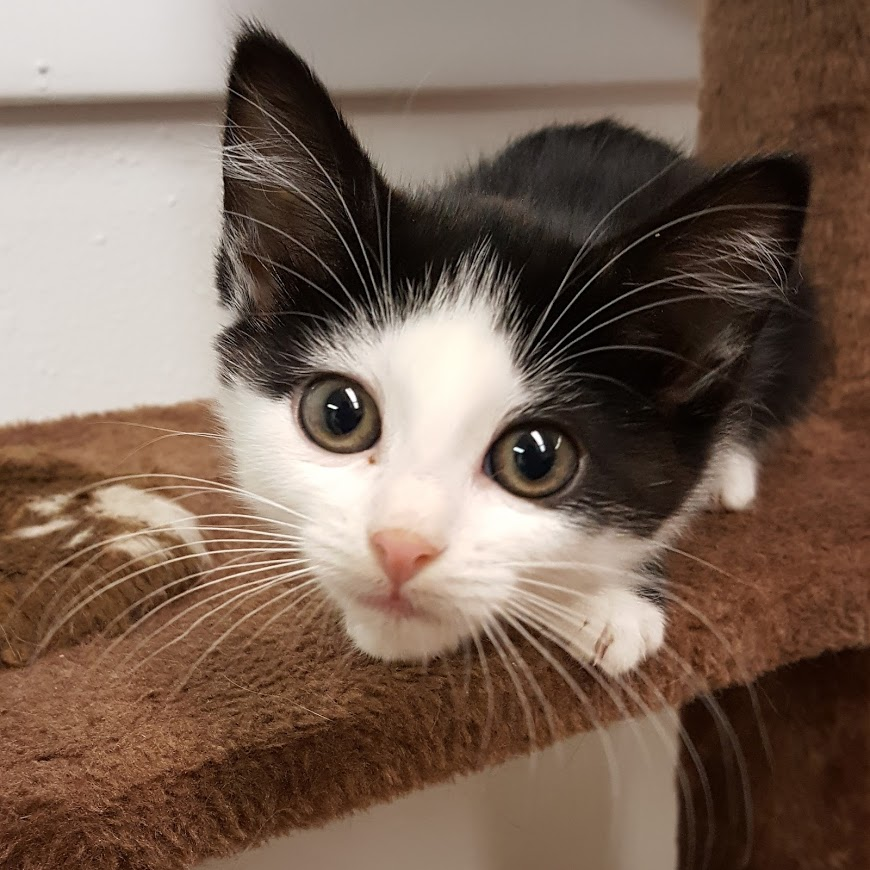 Second Chance Sheridan Cat Rescue's Photo