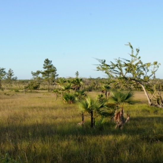 Belize Economic and Ecological Development Fund's Photo