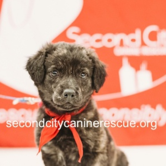 SECOND CITY CANINE RESCUE's Photo