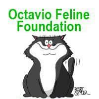 OCTAVIO FELINE FOUNDATION CORP's Photo
