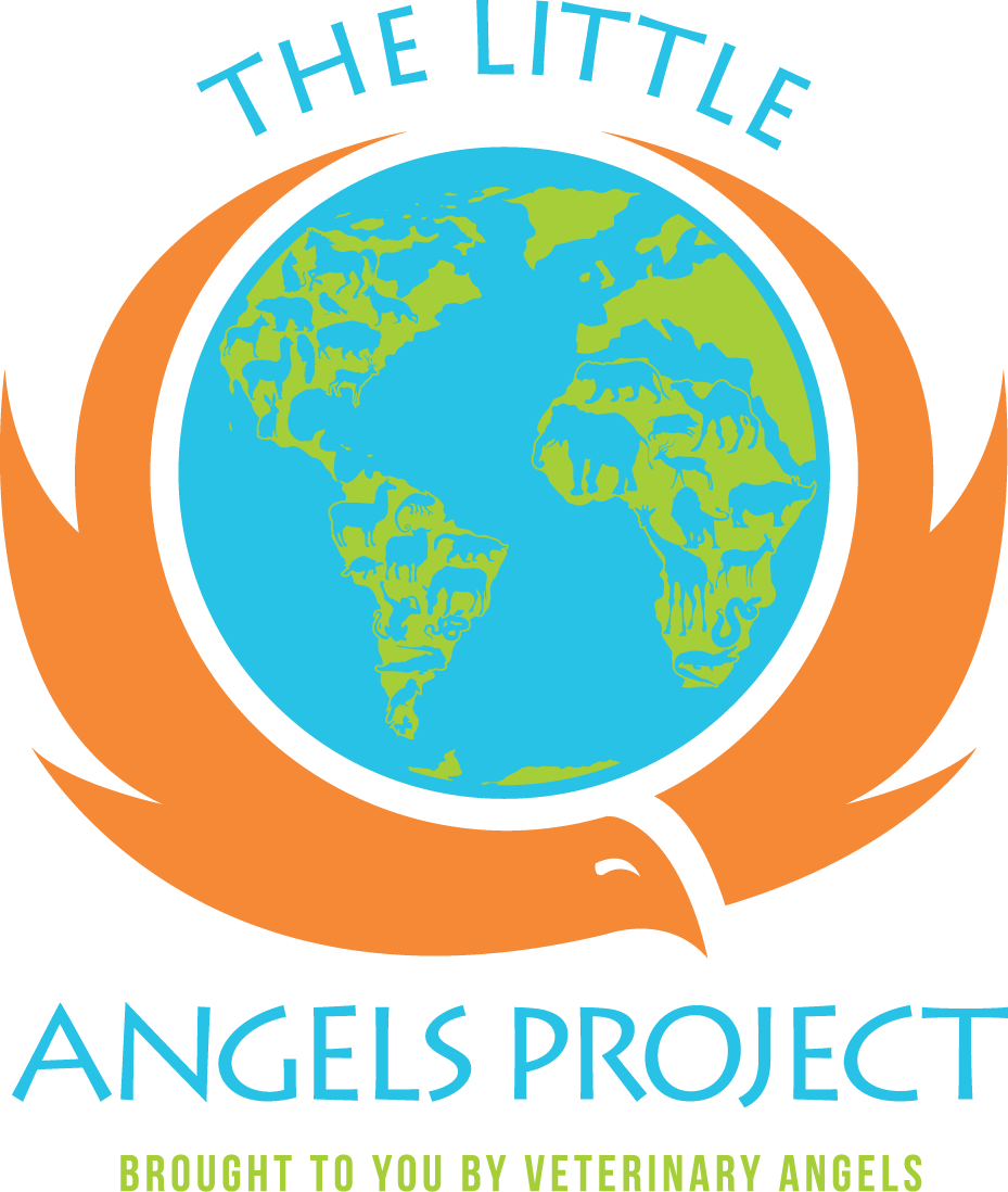 LITTLE ANGELS PROJECT's Photo