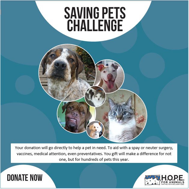 HOPE FOR ANIMALS' Photo
