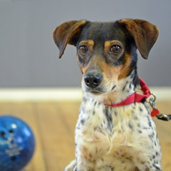 MLAR's Dog Bowl and Alley Cats: Bowling to Benefit Homeless Animals Photo