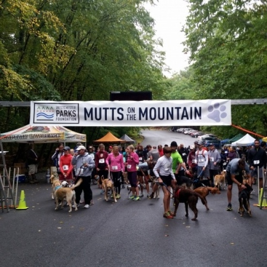 Mutts on the Mountain Photo