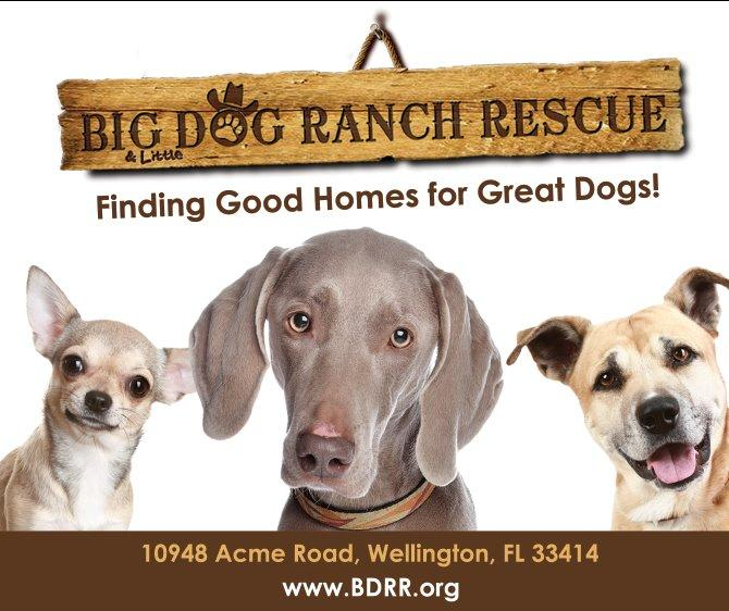DTR for Big Dog Ranch Rescue Photo