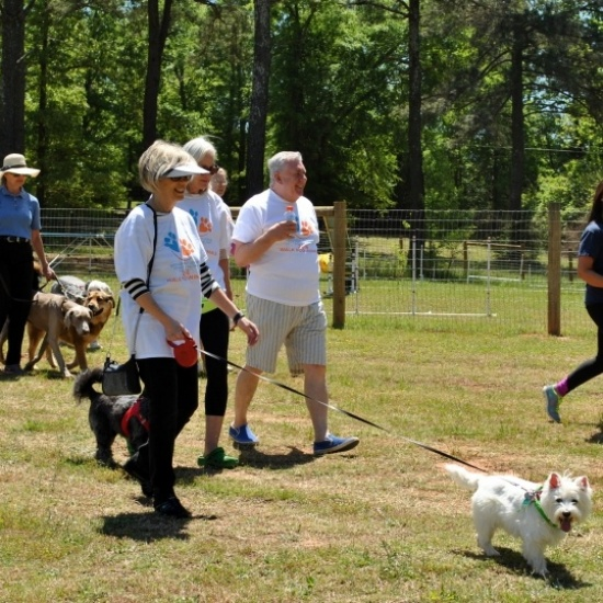 2017 Walk for Animals Photo