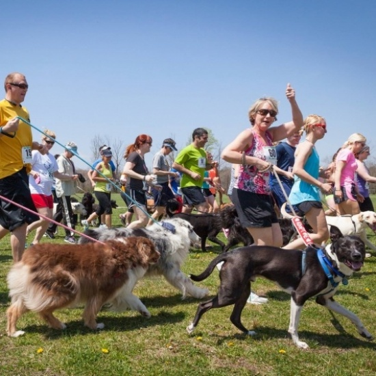 Run For The Paws Photo