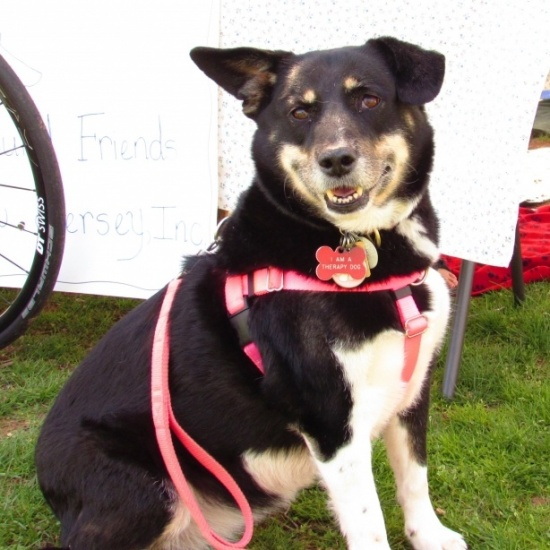 Paws for a Cause Dog Walk Photo