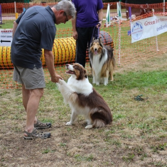Barkfest & Rover Romp 2017 Photo