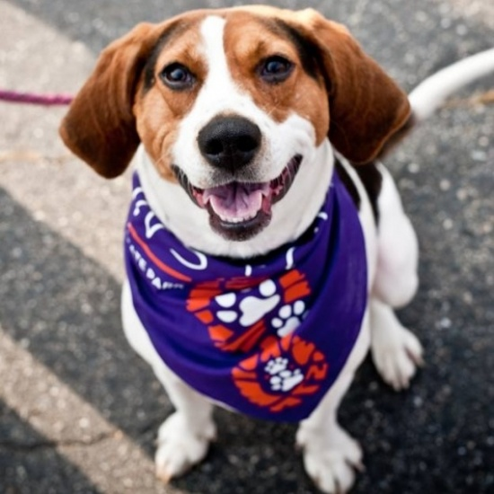 Baypath Humane Society of Hopkinton 2017 Paws & Claws 5k Run/Walk Photo