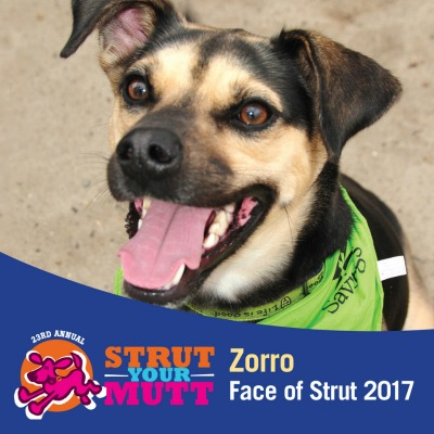 AWS' 23rd Annual Strut Your Mutt Photo
