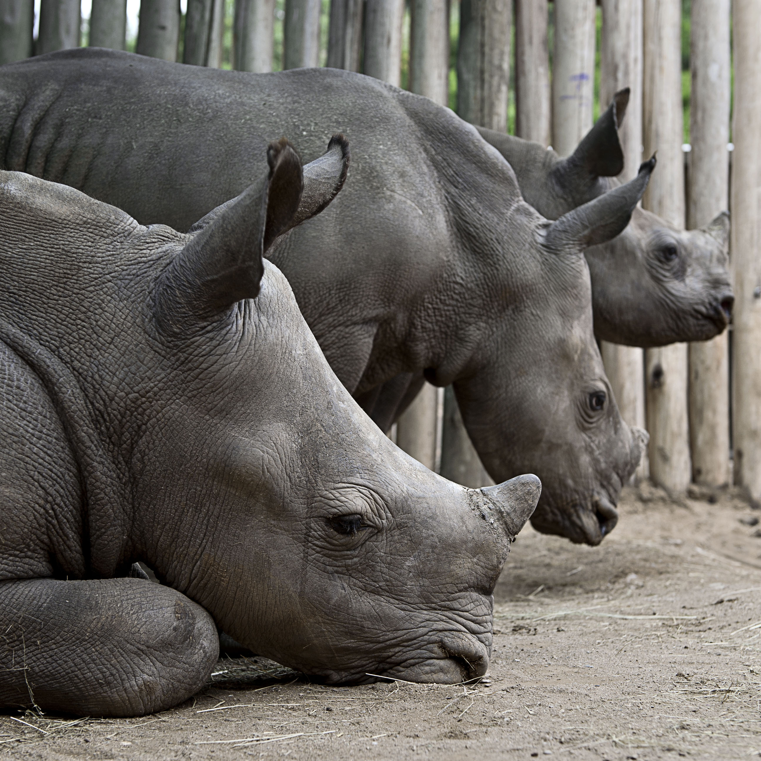 ENTRY DEADLINE EXTENDED TO OCTOBER 20  — The 2017 Annual International Rhino Art Competition! Photo