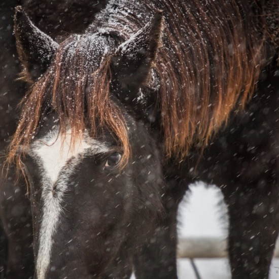 This Old Horse Inc.'s Photo